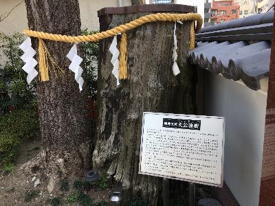 神田神社(神田明神)の自然