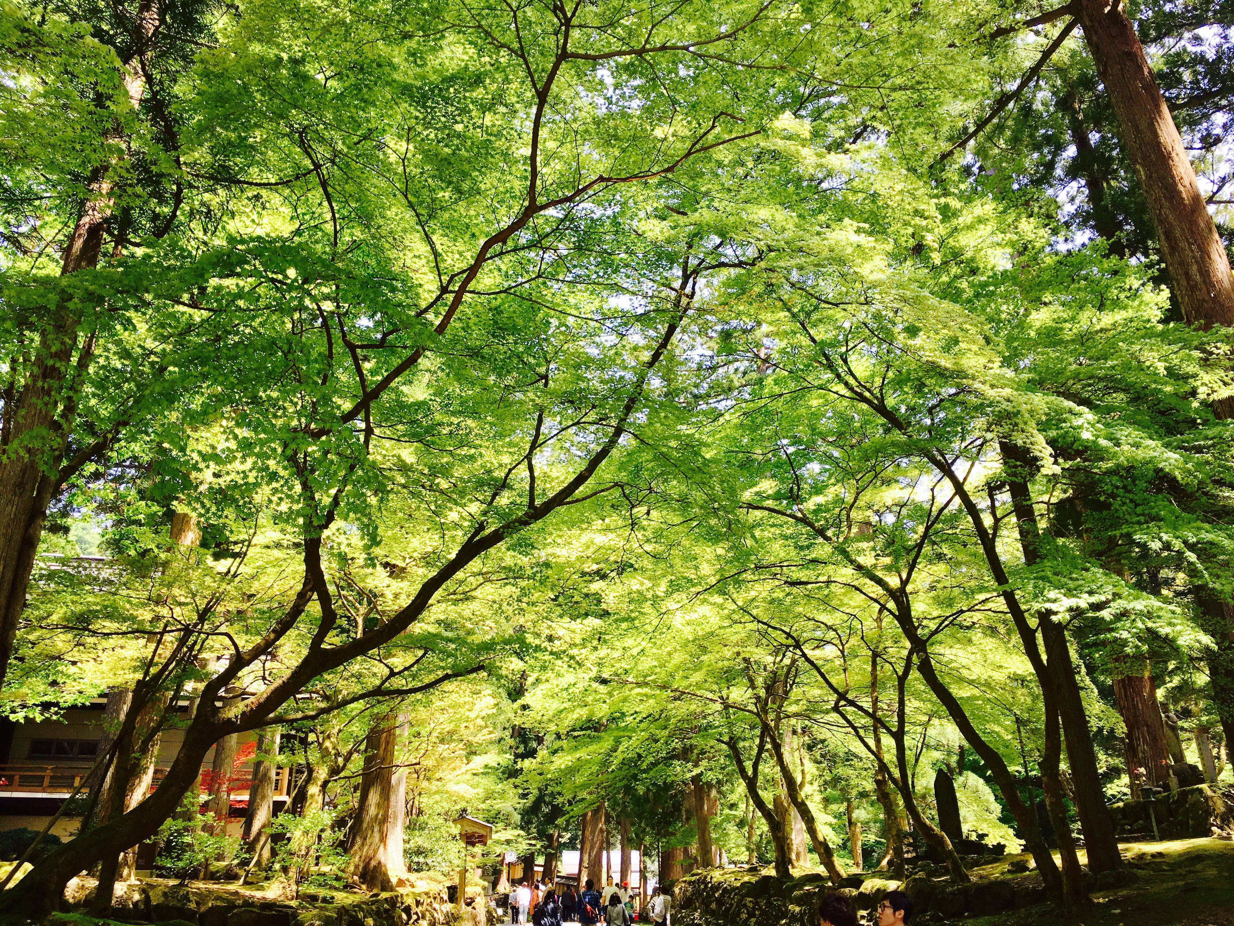 永平寺の自然(福井県轟駅)
