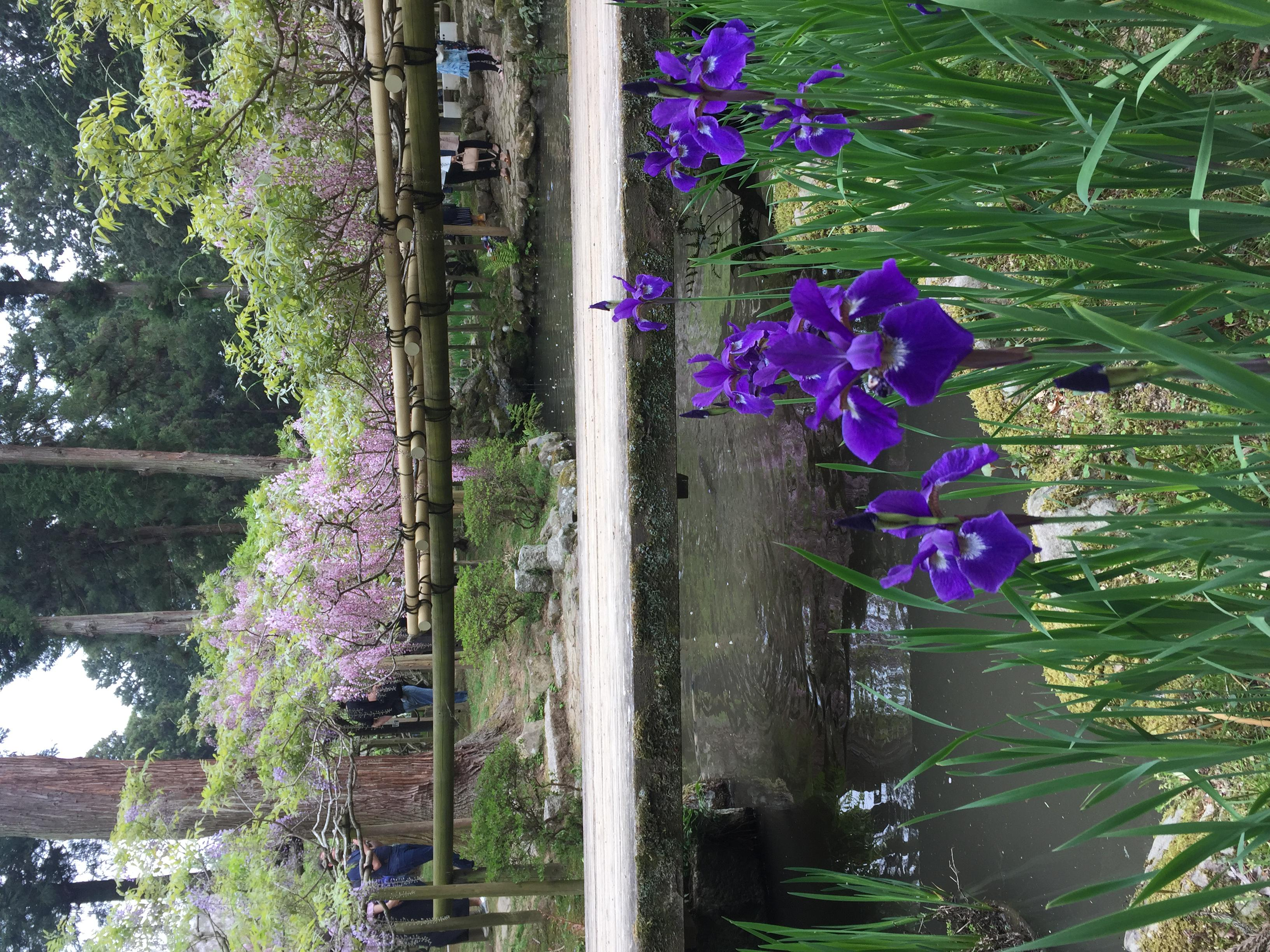 春日大社の自然