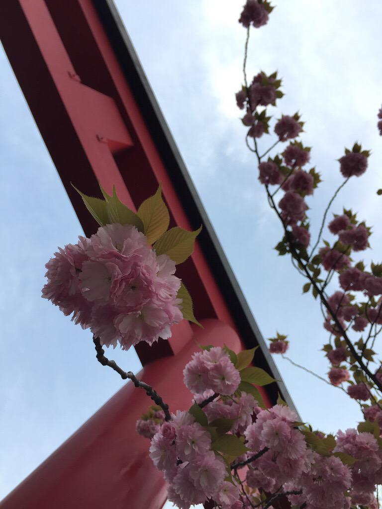 亀戸天神社の自然