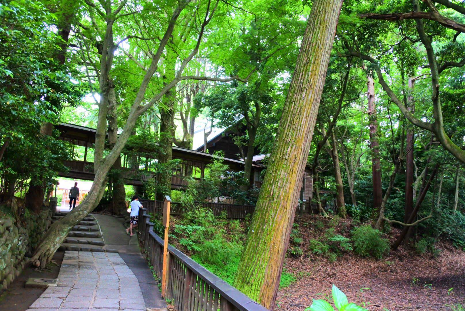 報徳二宮神社の自然