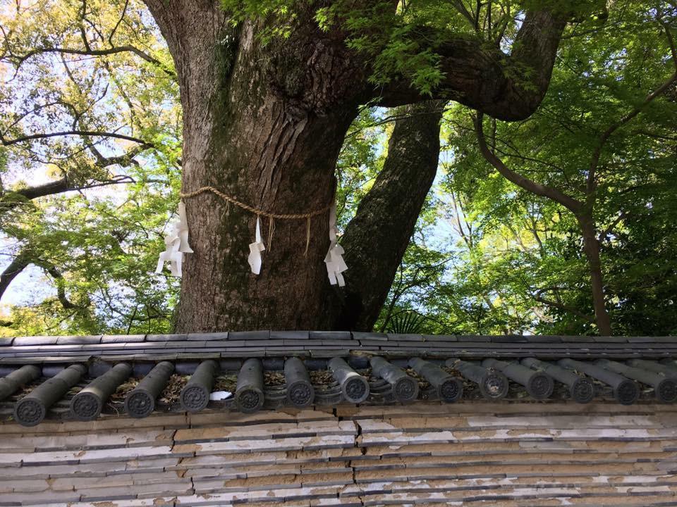 石清水八幡宮の自然