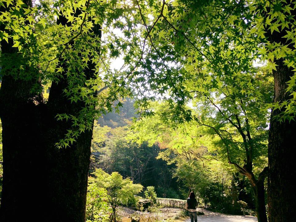 宝満宮竈門神社の自然(福岡県太宰府駅)