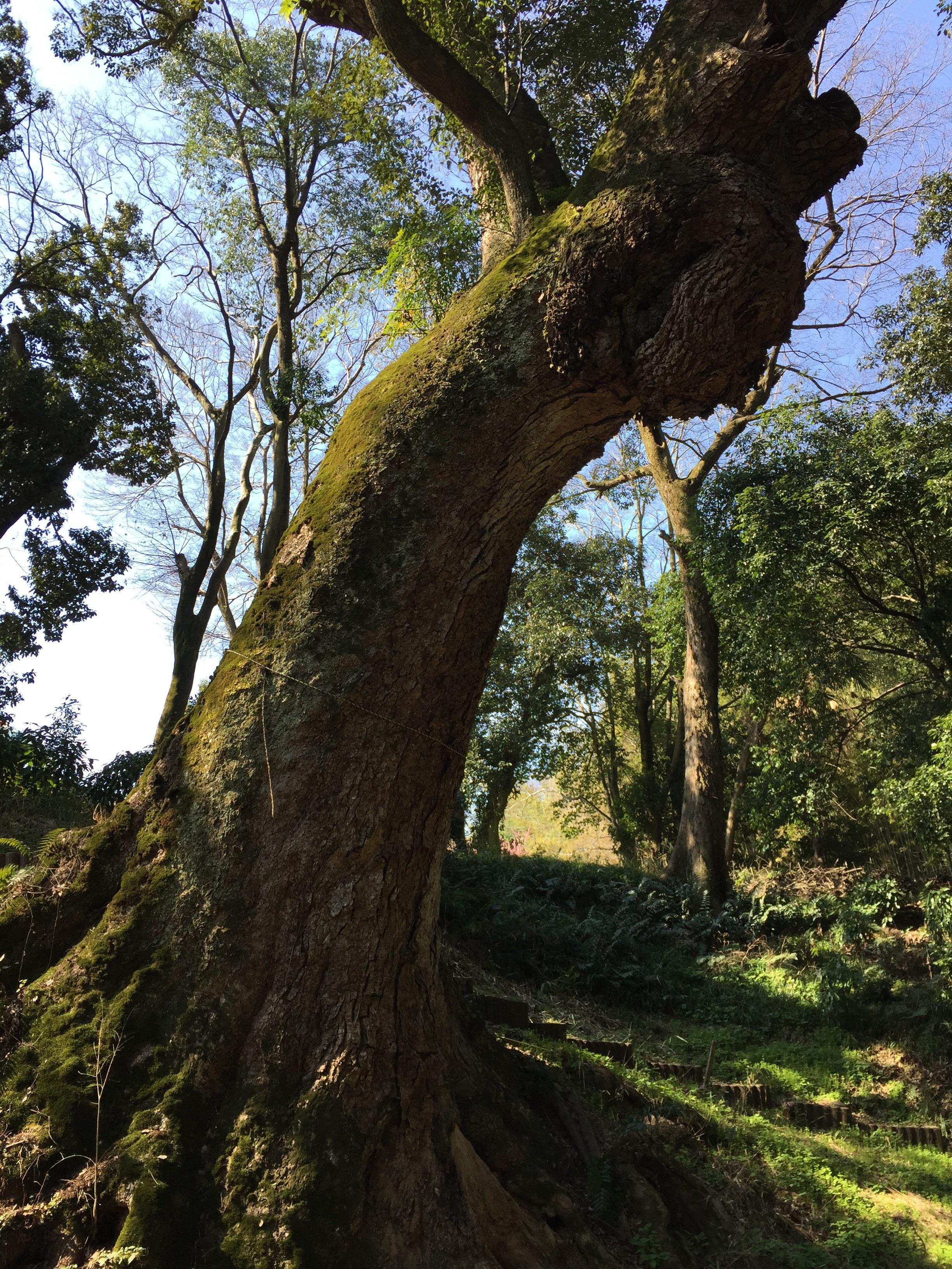 奈良豆比古神社の自然