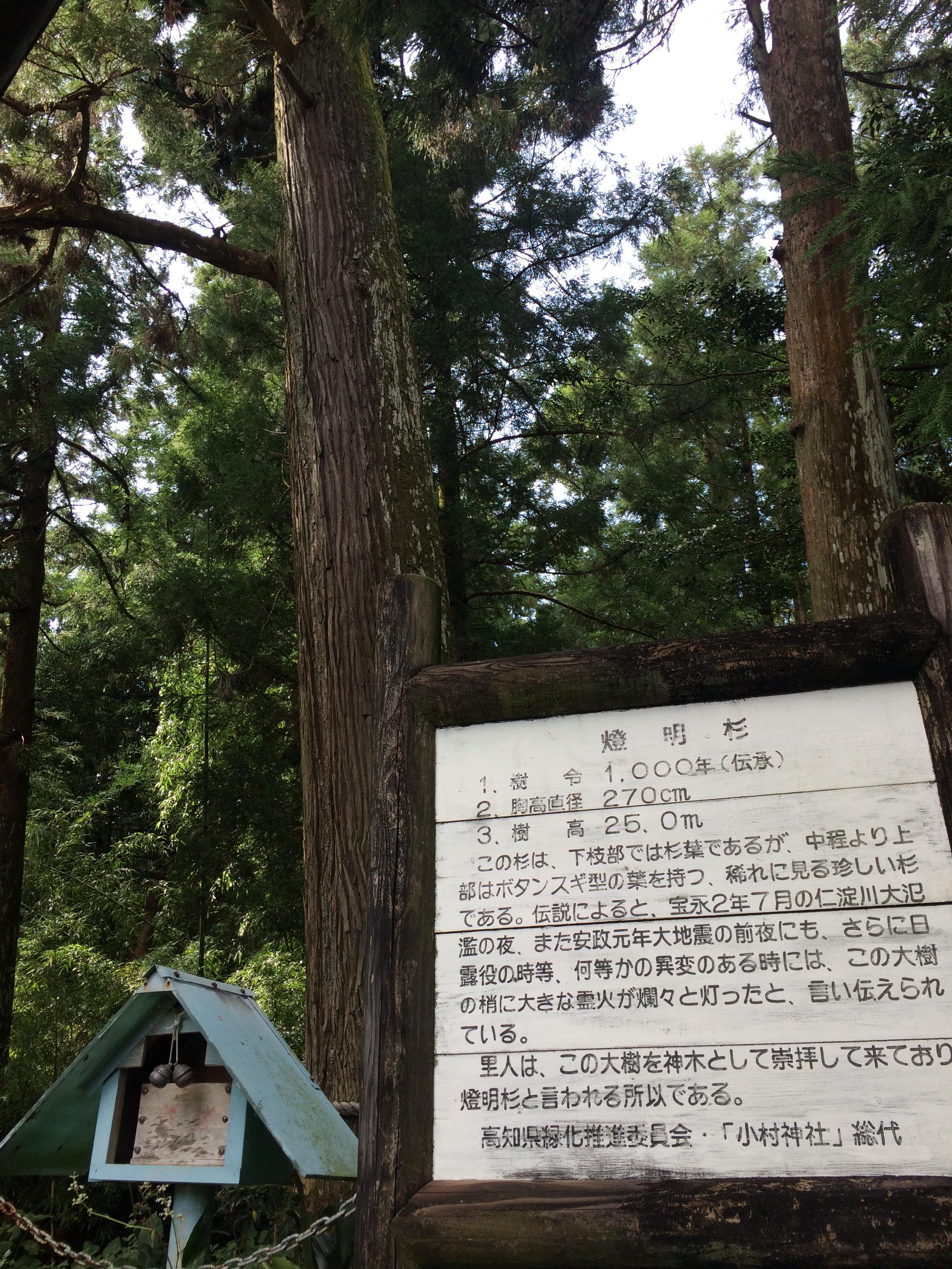 小村神社の自然