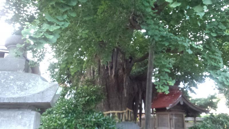 宮城野八幡神社の自然
