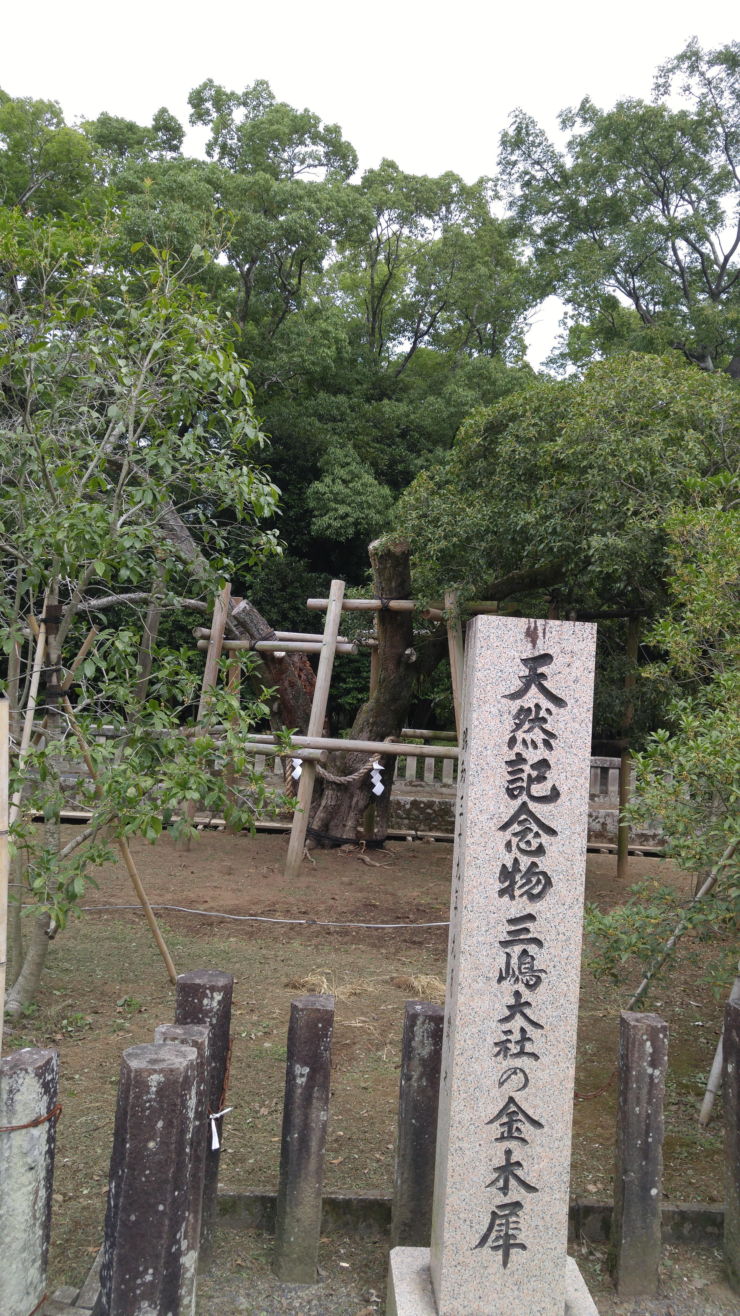 三嶋大社の自然