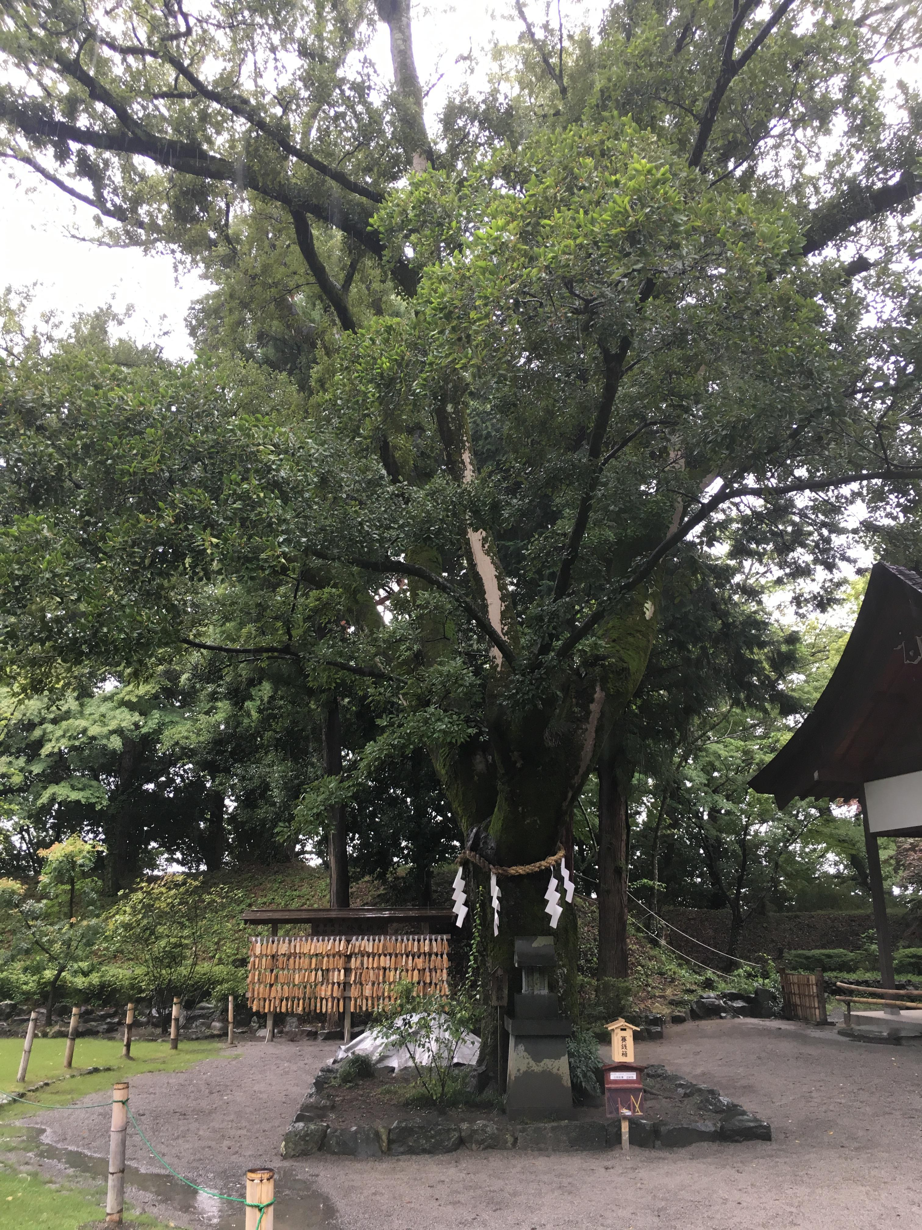 武田神社の自然