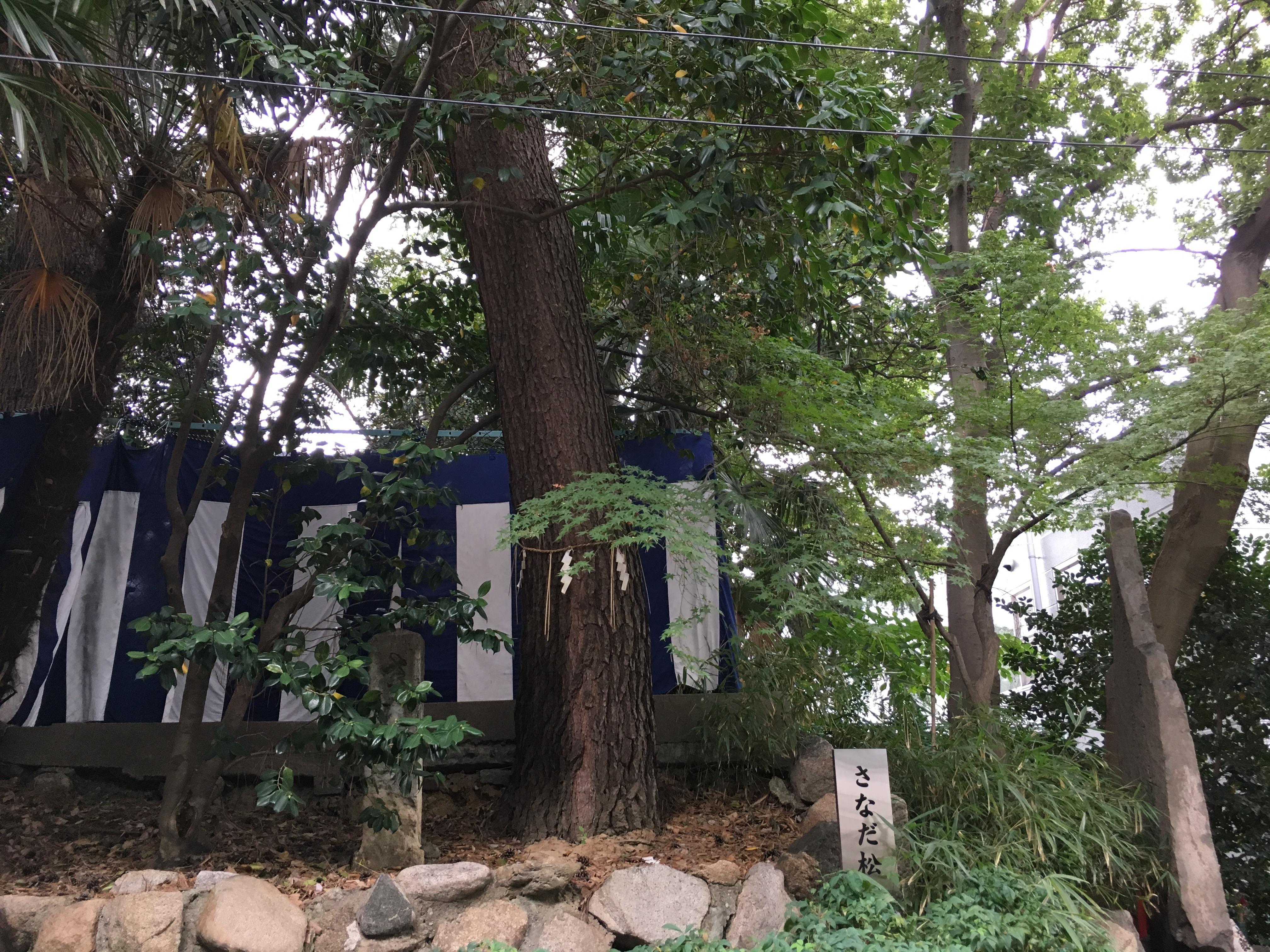 安居神社の自然