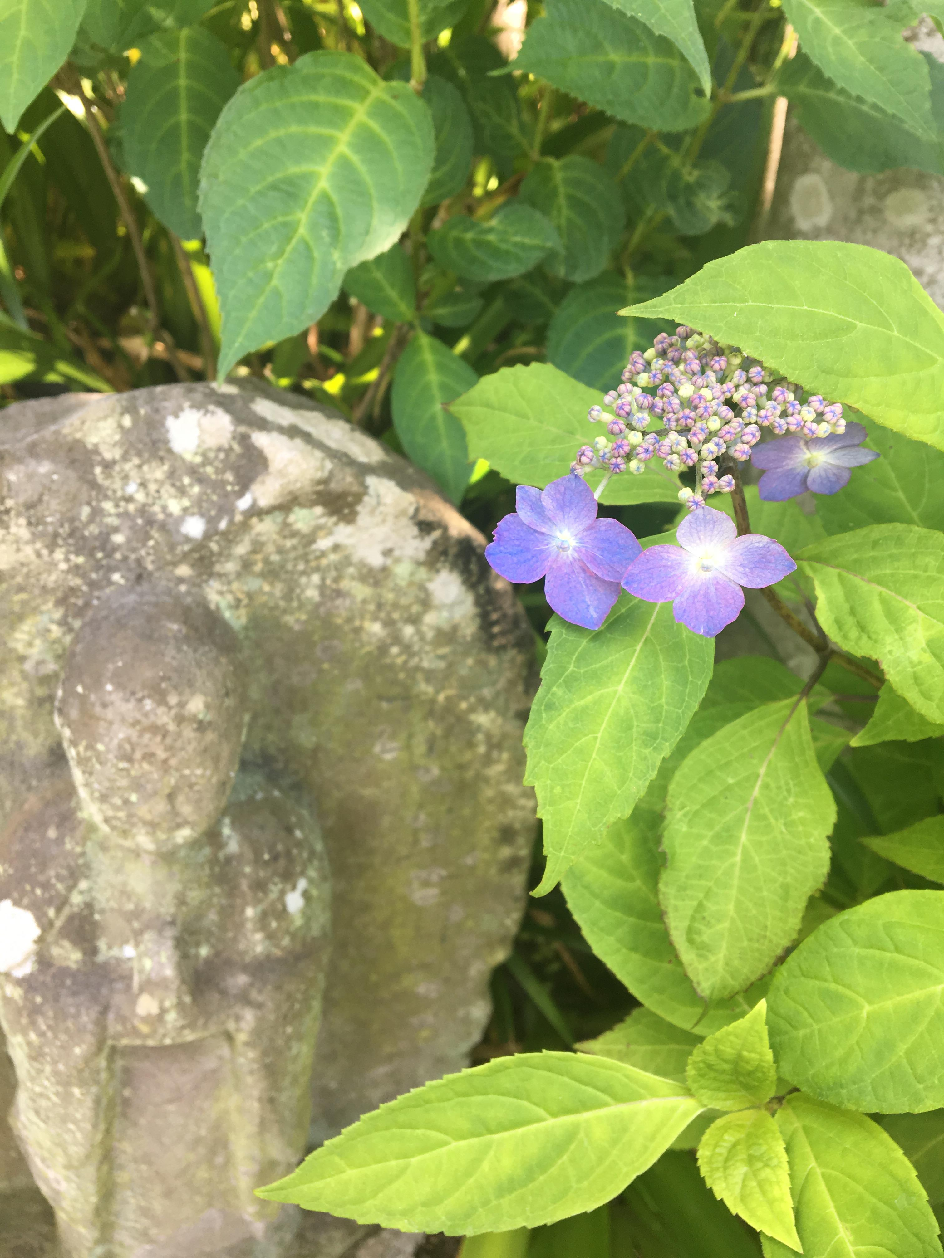 長谷寺の自然