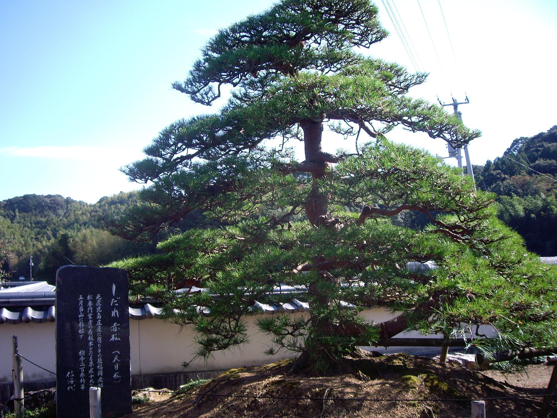 種間寺の自然