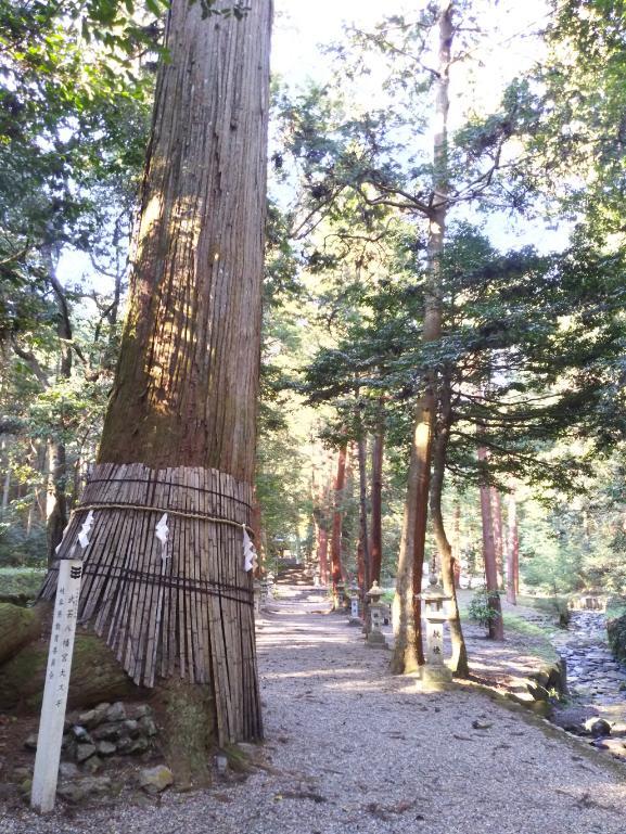 八幡神社(武芸八幡宮)の自然