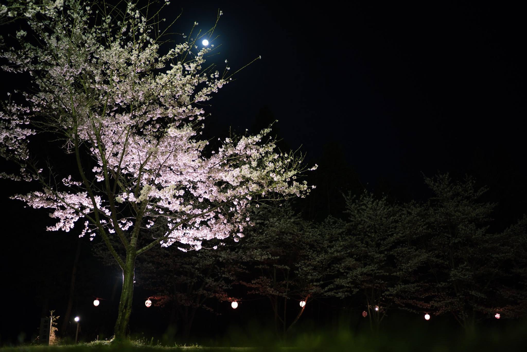 宮崎神社の自然
