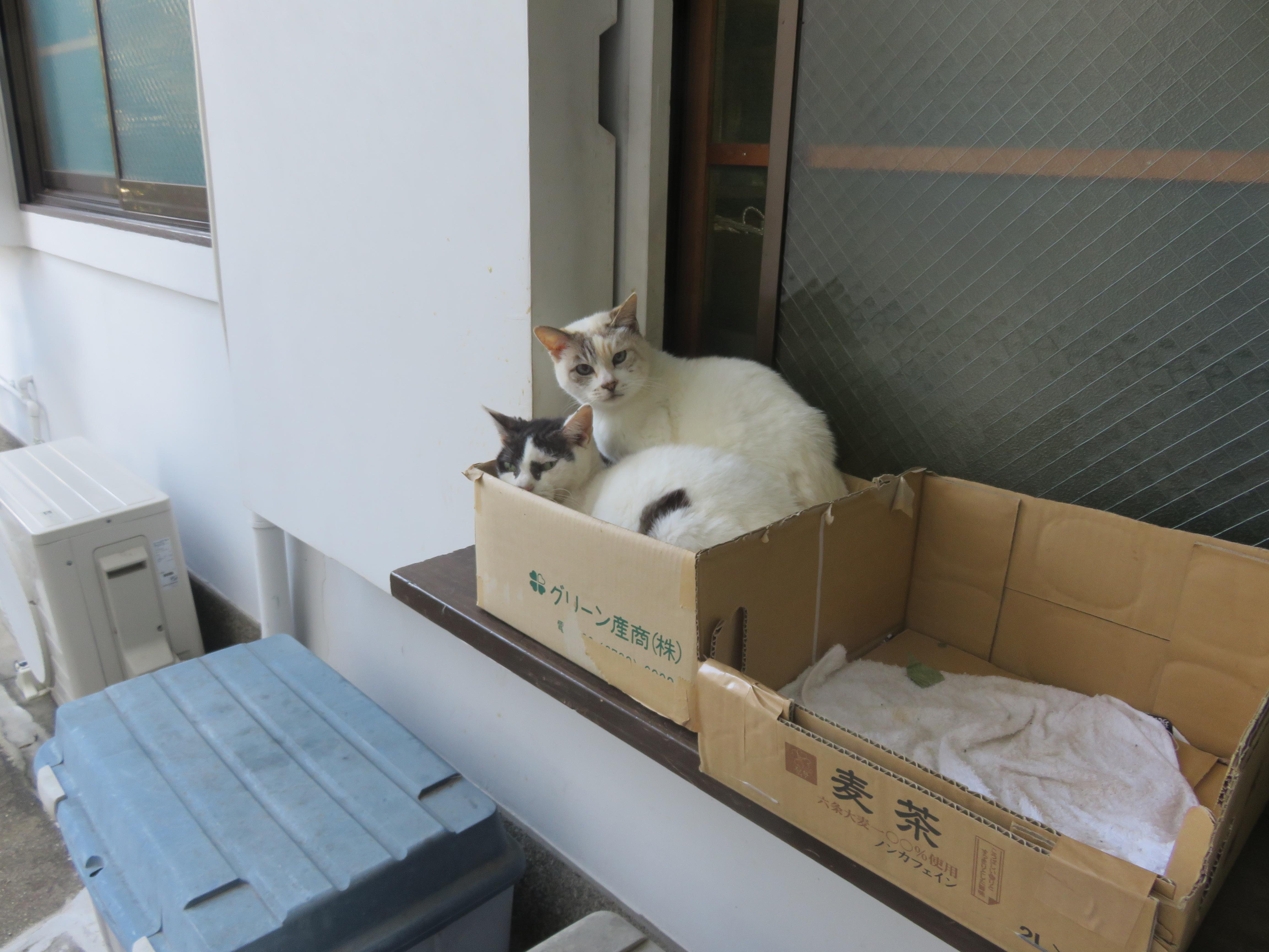 安居神社の動物