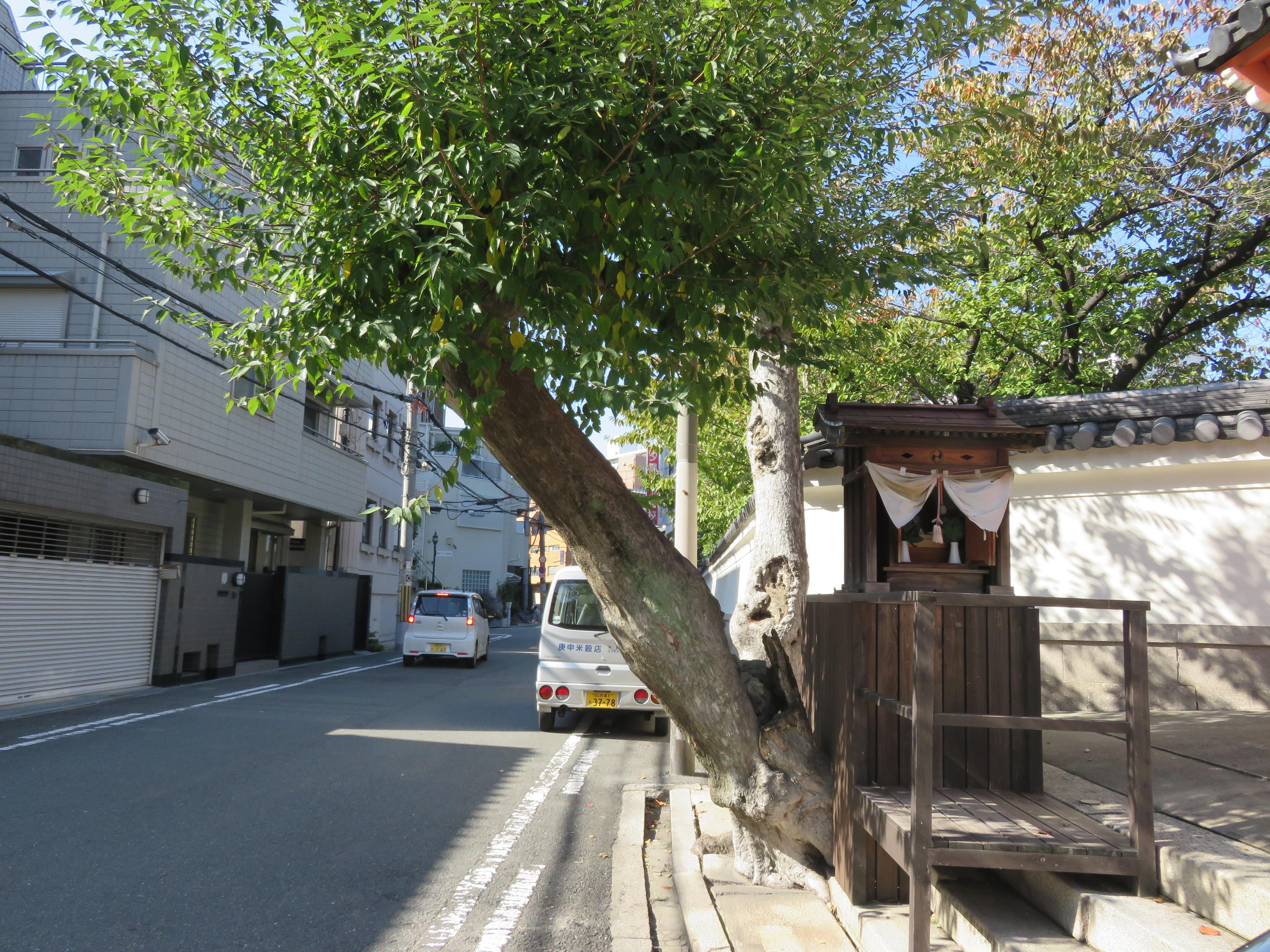 四天王寺庚申堂の自然