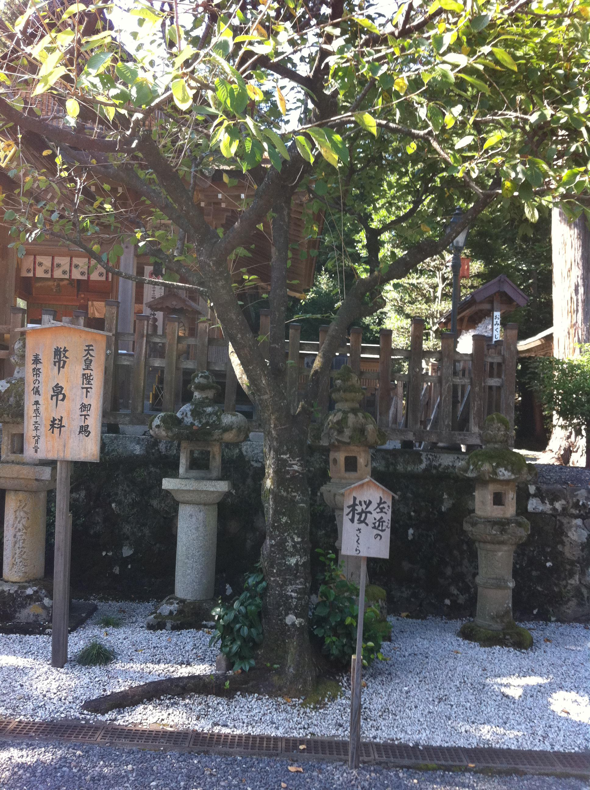 宇倍神社の自然