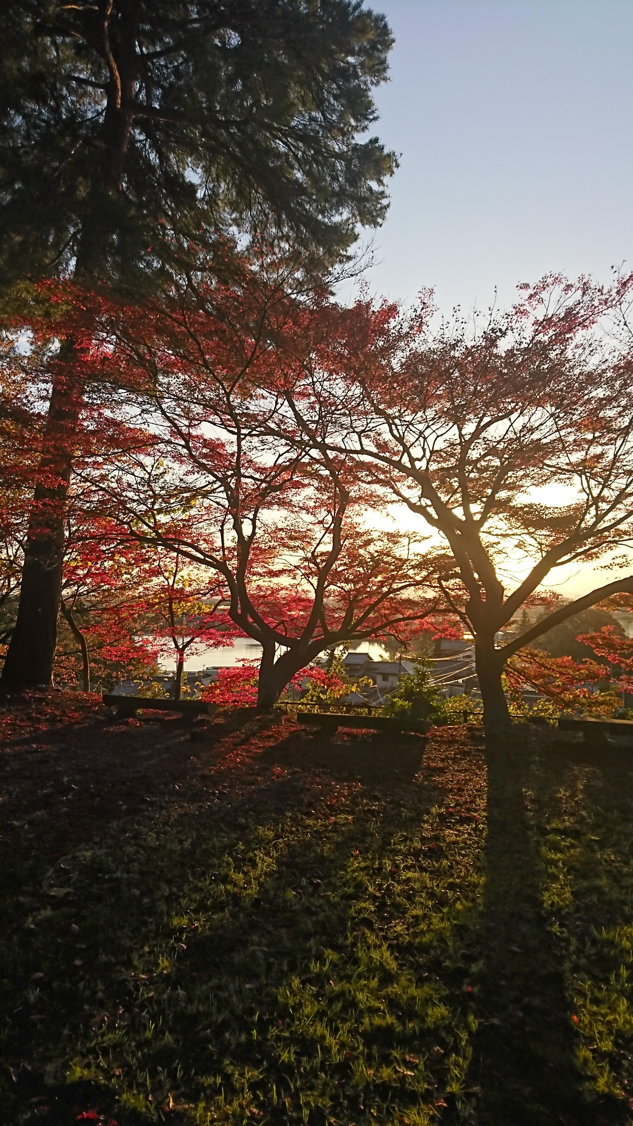 胡宮神社の自然(滋賀県多賀大社前駅)