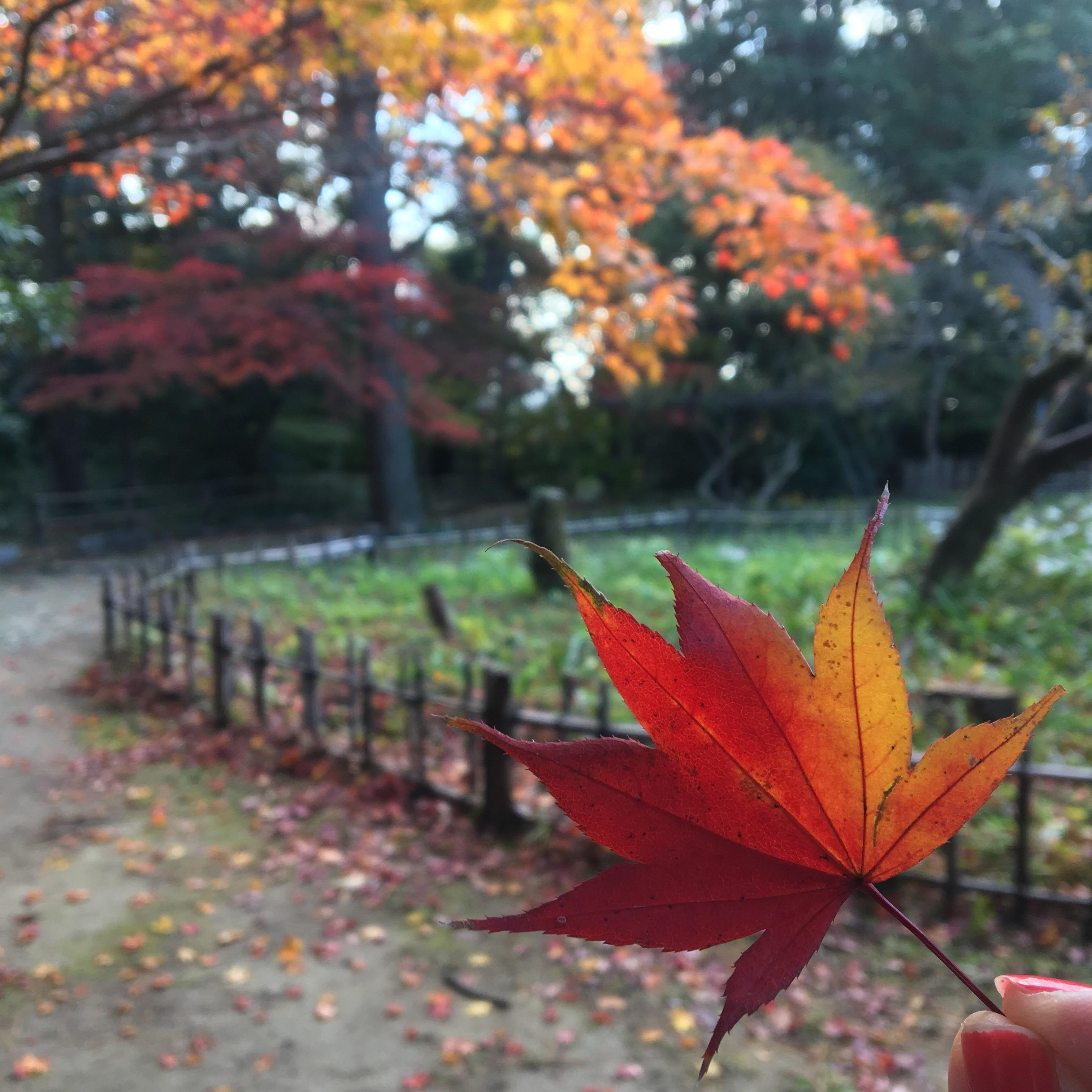 青葉神社の自然