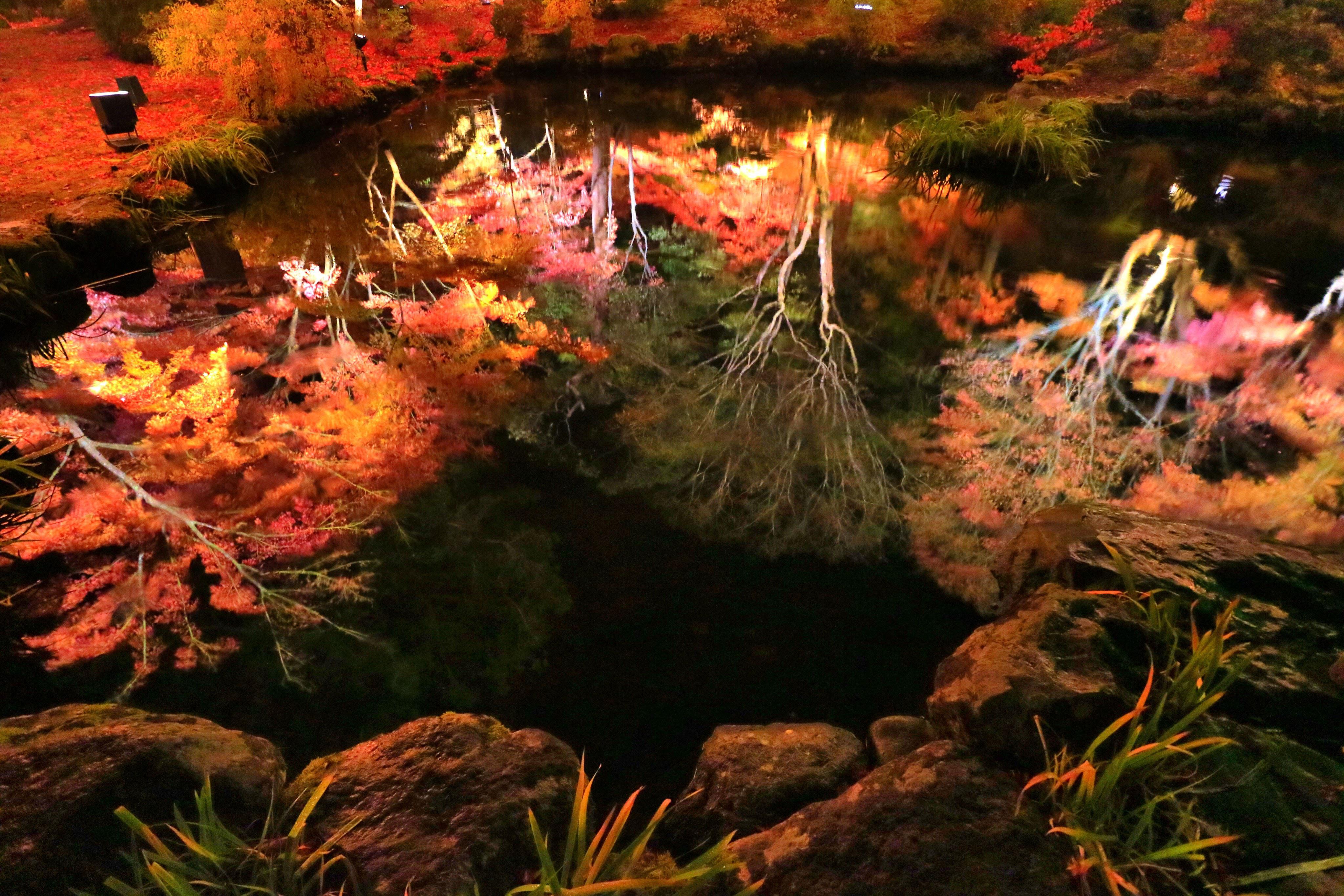 円通院の自然