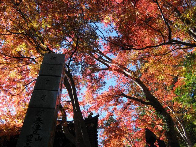 高尾山薬王院の自然