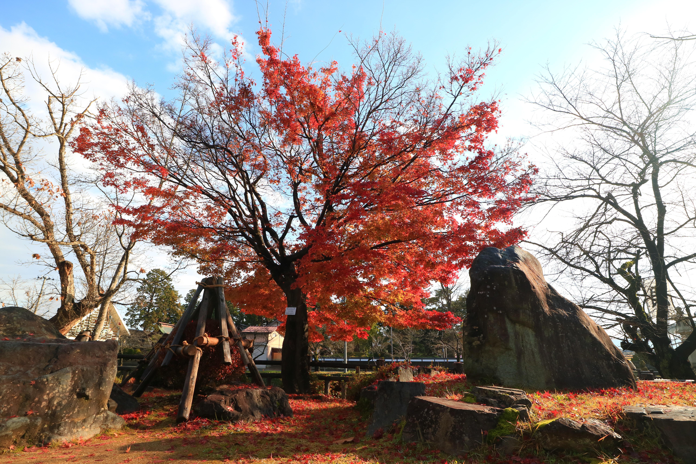 上杉神社の自然