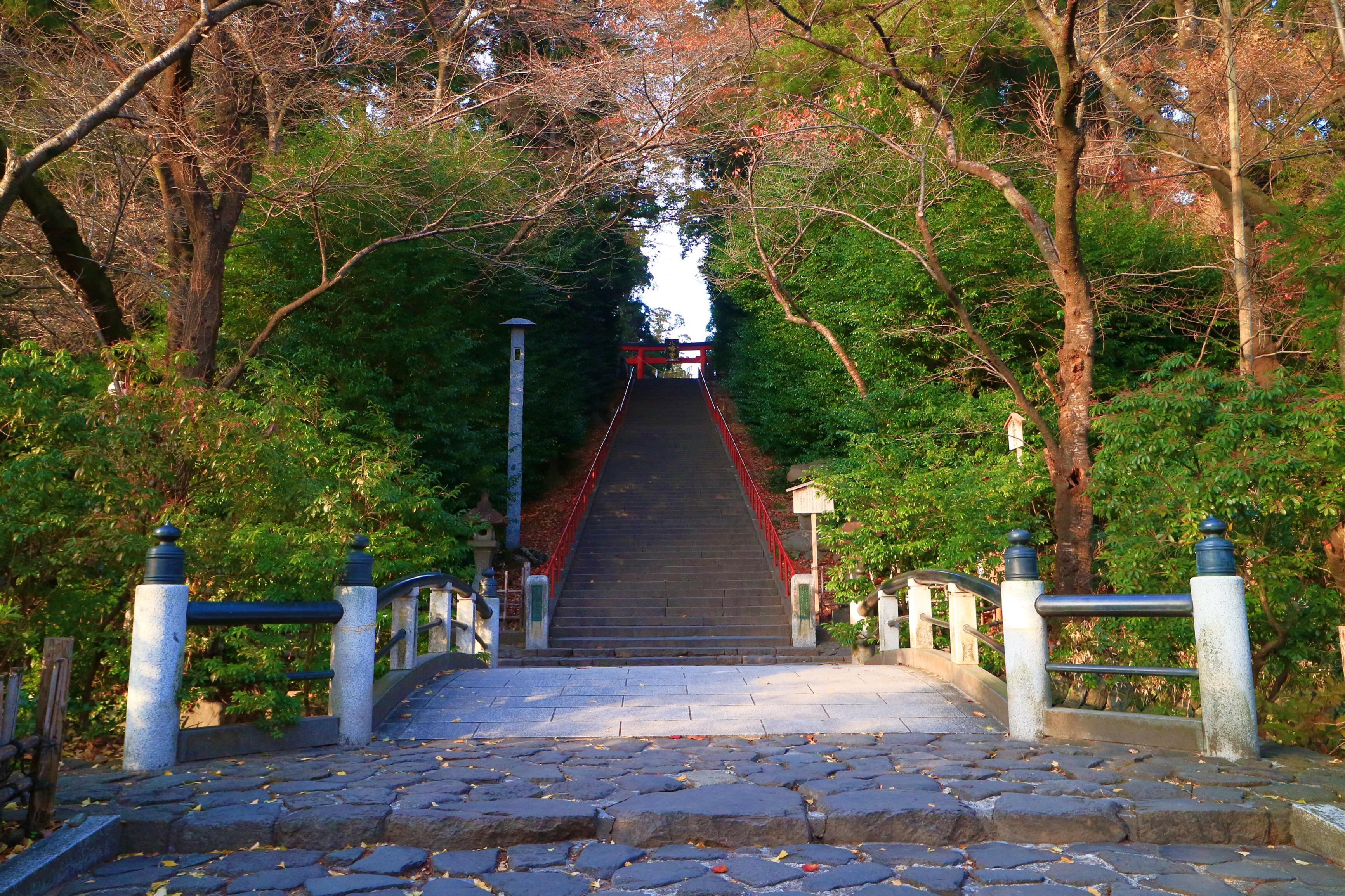 大崎八幡宮の自然