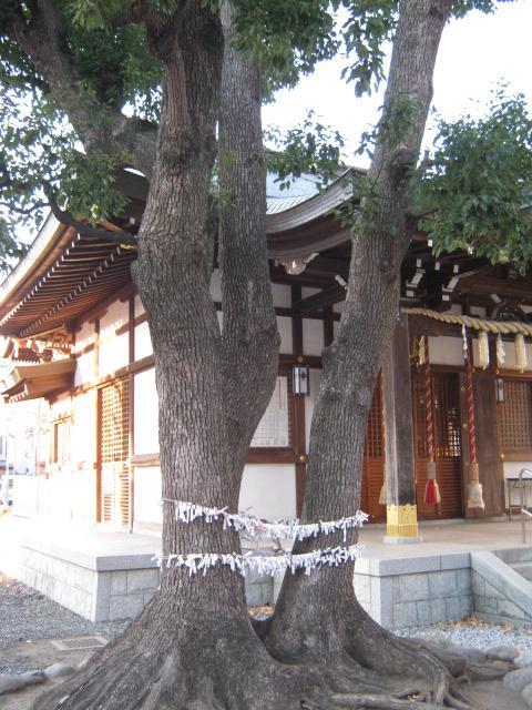 橘樹神社の自然