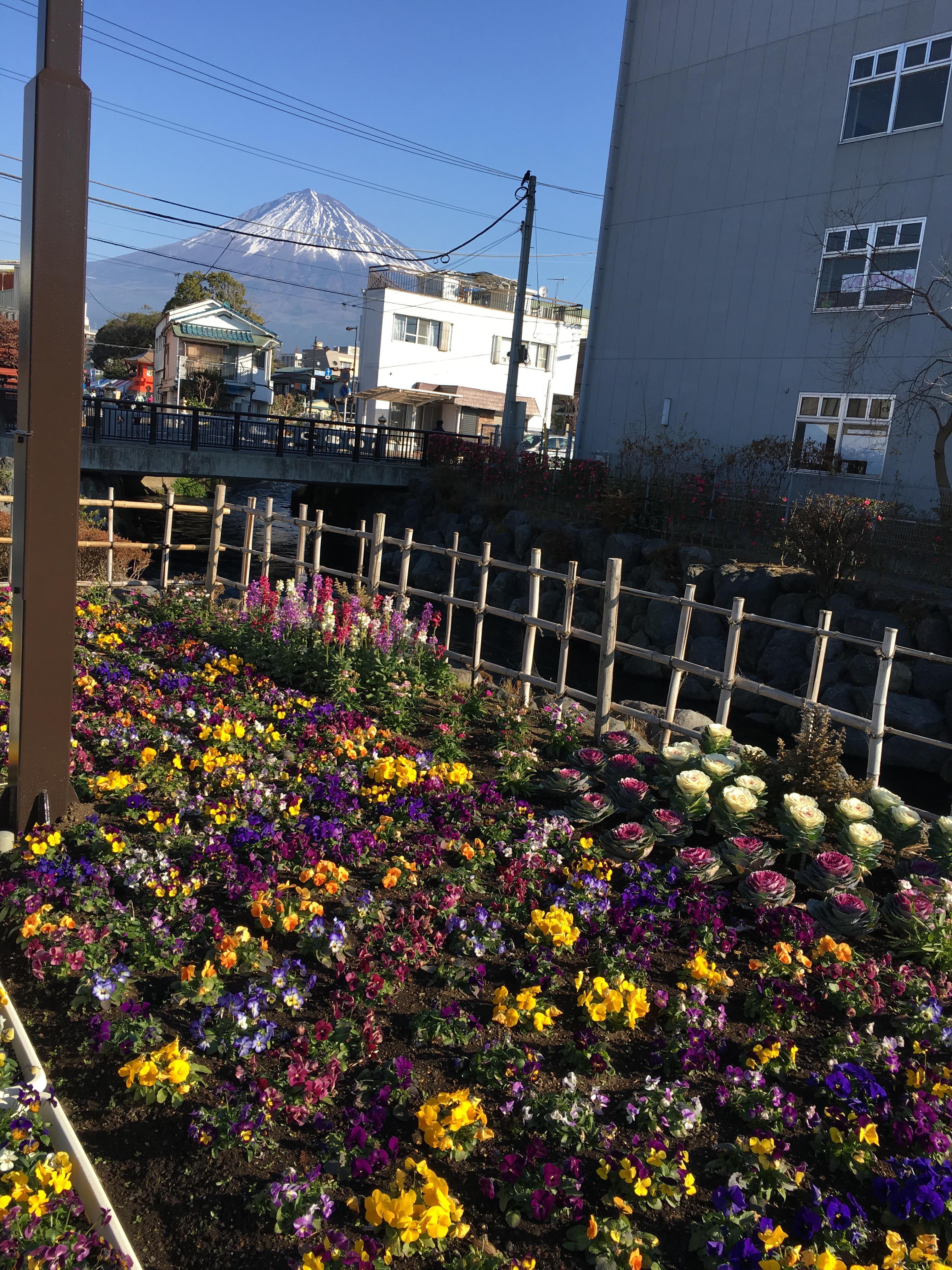 富士山本宮浅間大社の自然