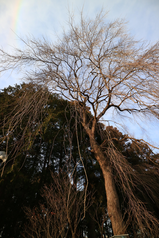 仙台東照宮の自然