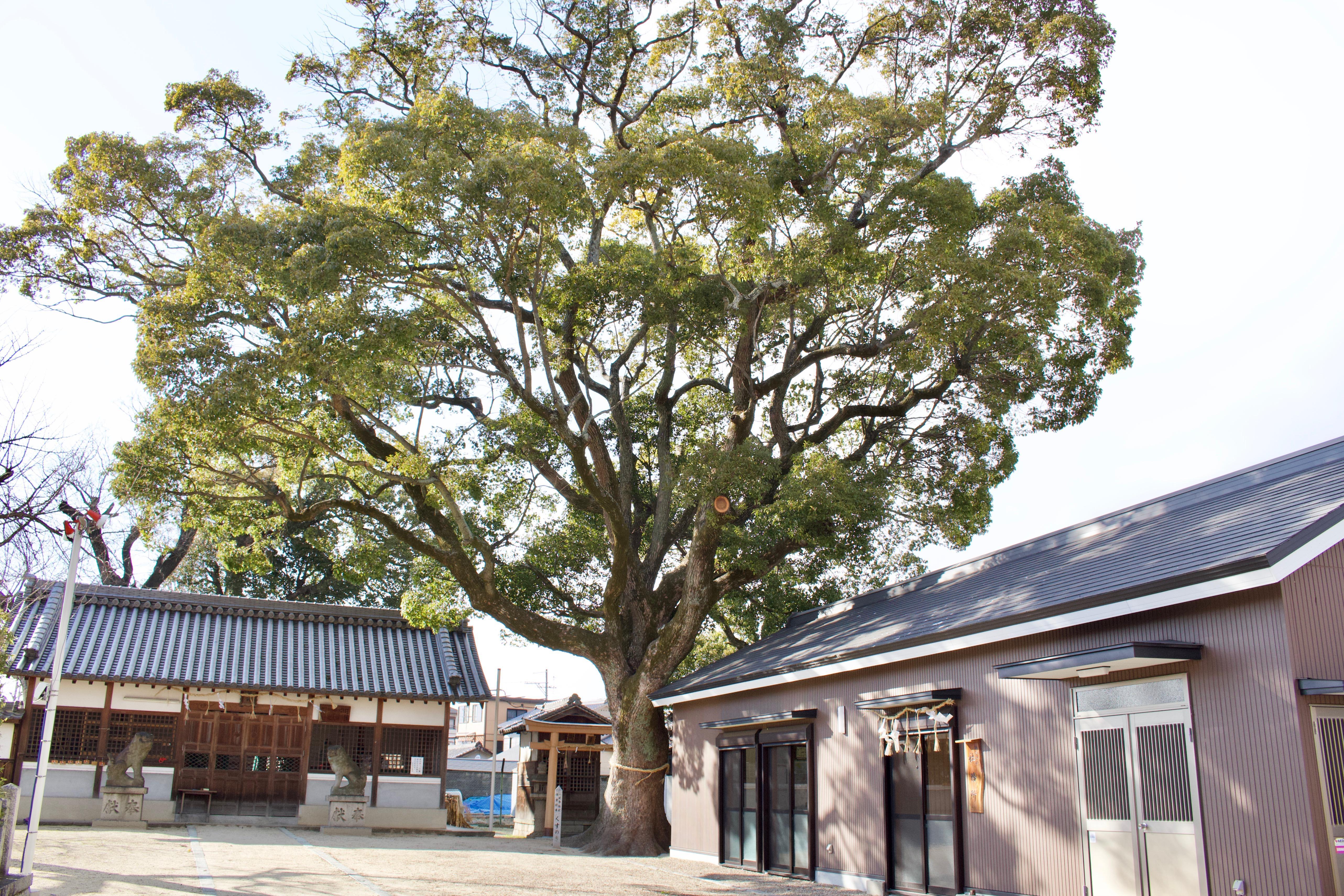 樟本神社の自然