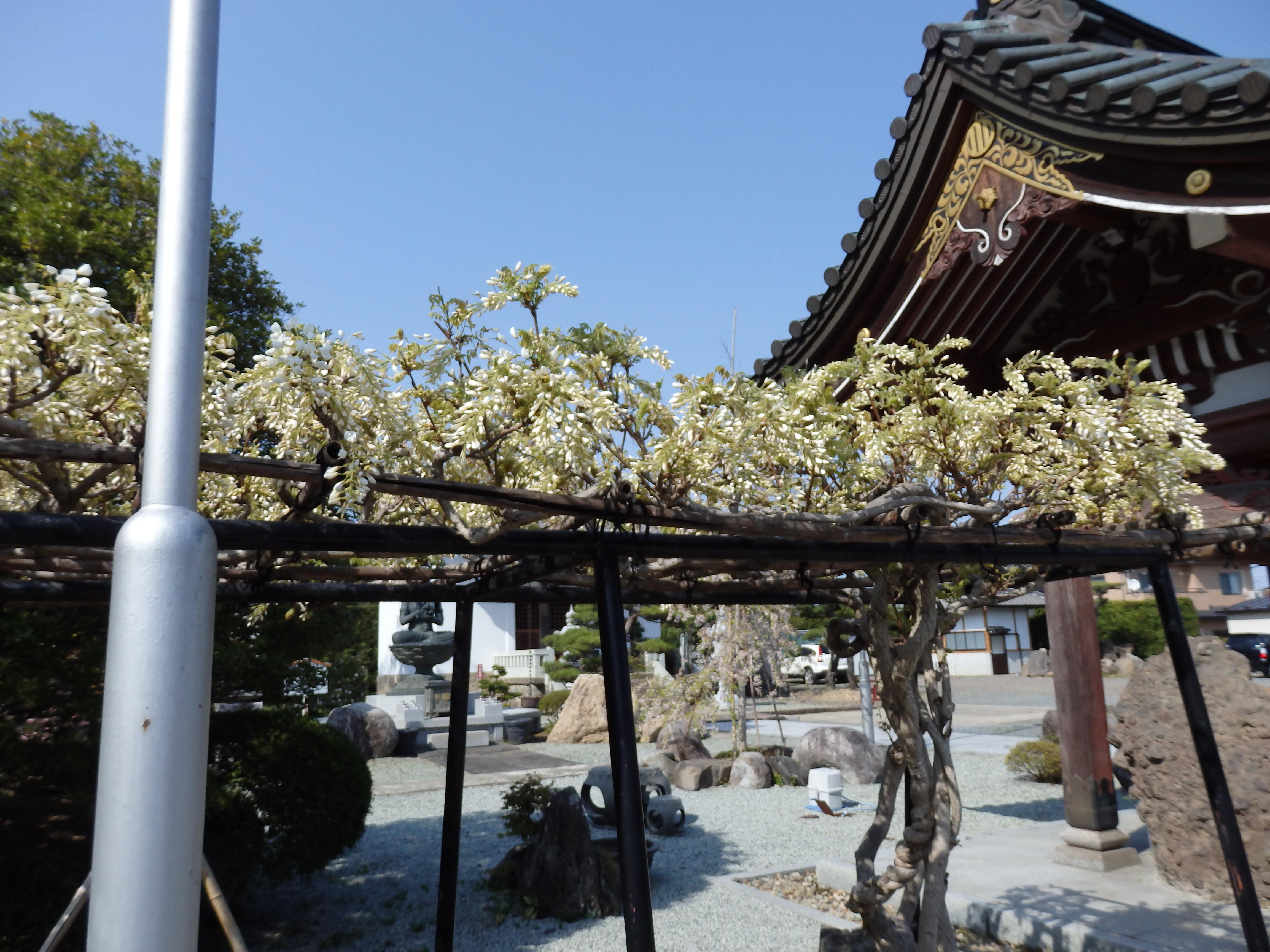龍宝寺の自然
