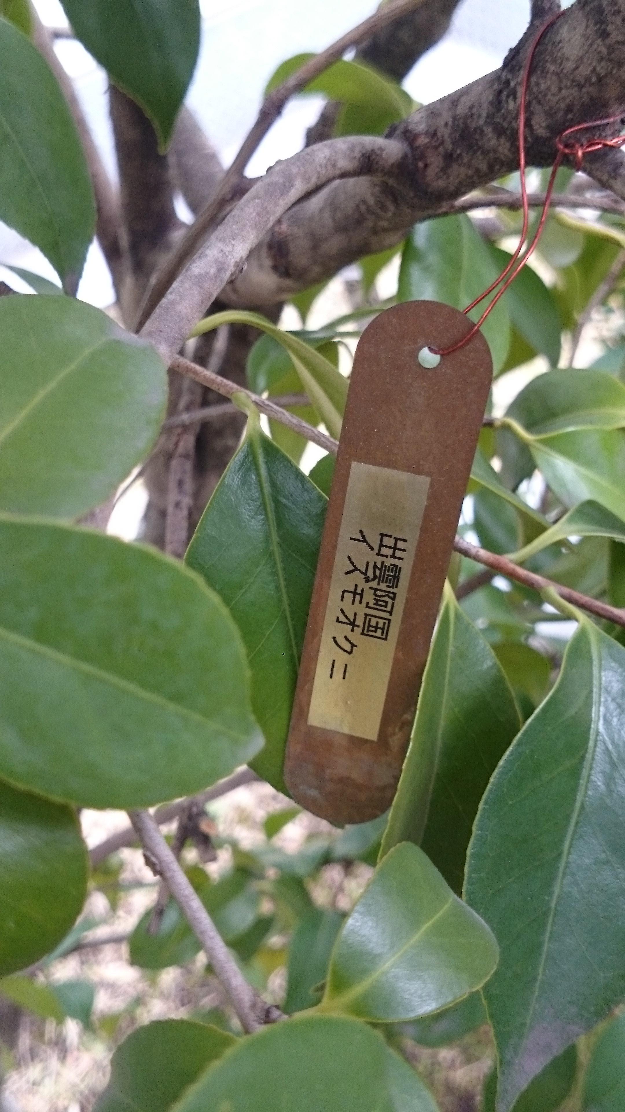 ギンザコマツ三輪神社の自然