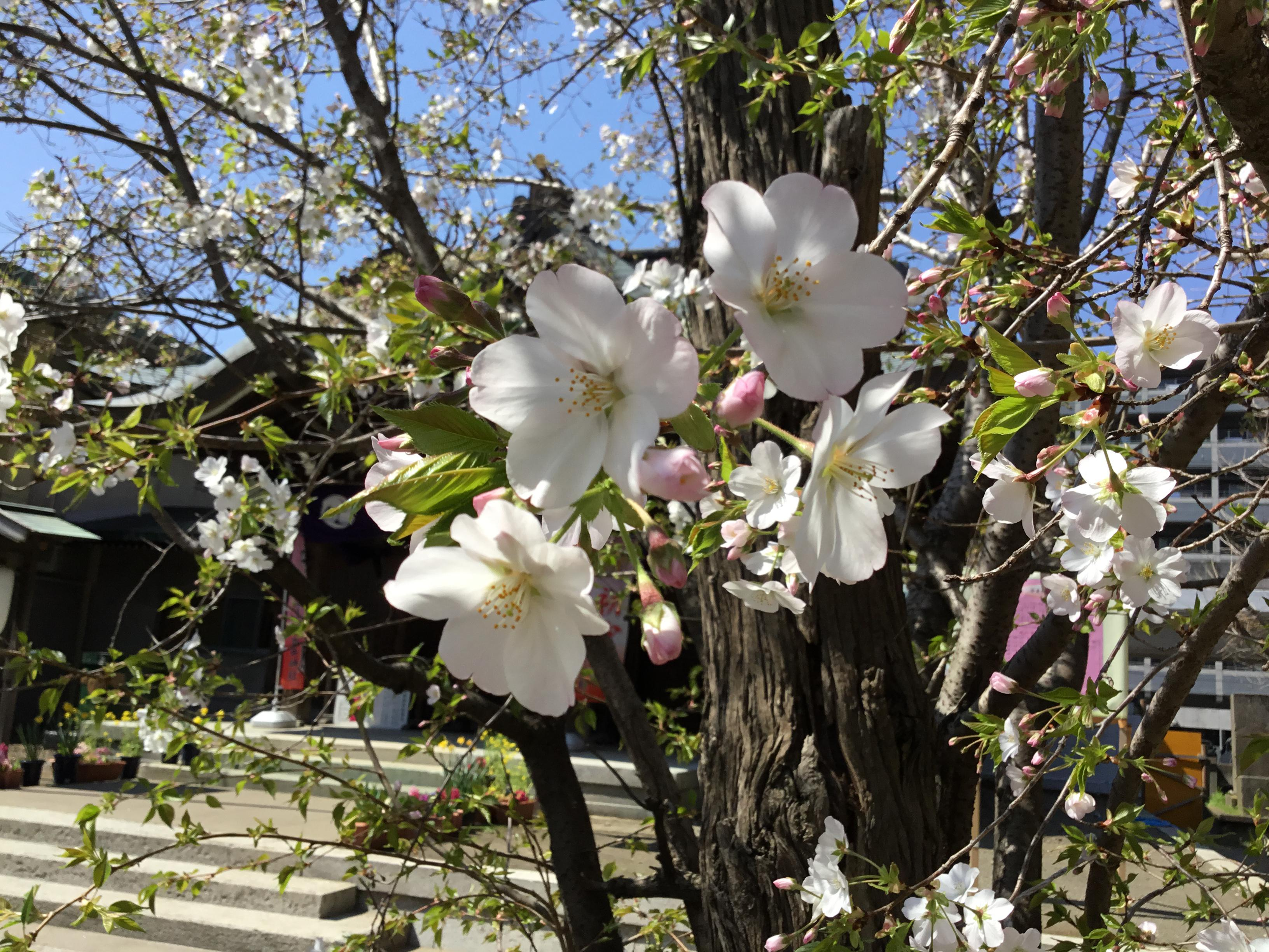 磐井神社の庭園