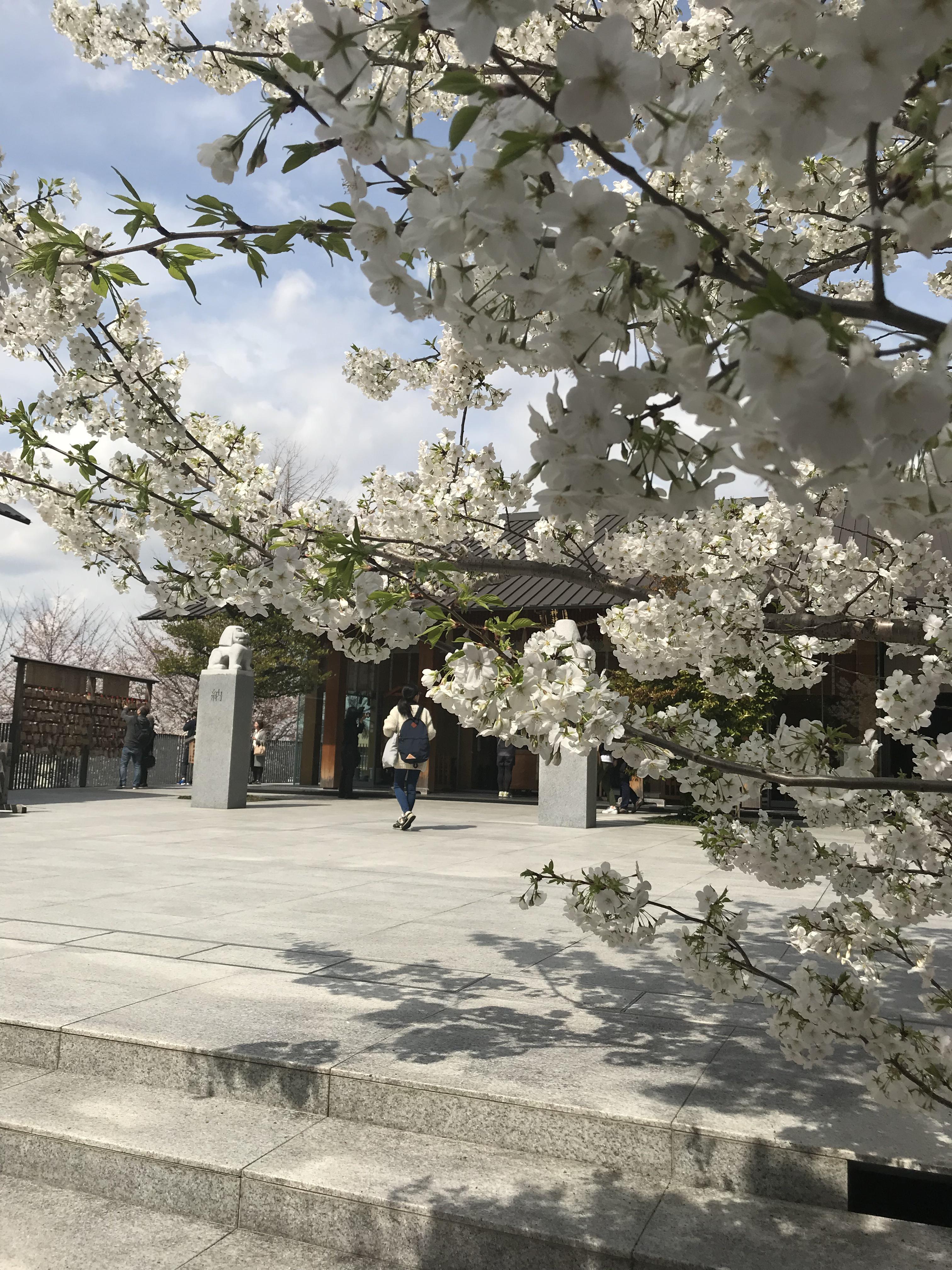 赤城神社の自然