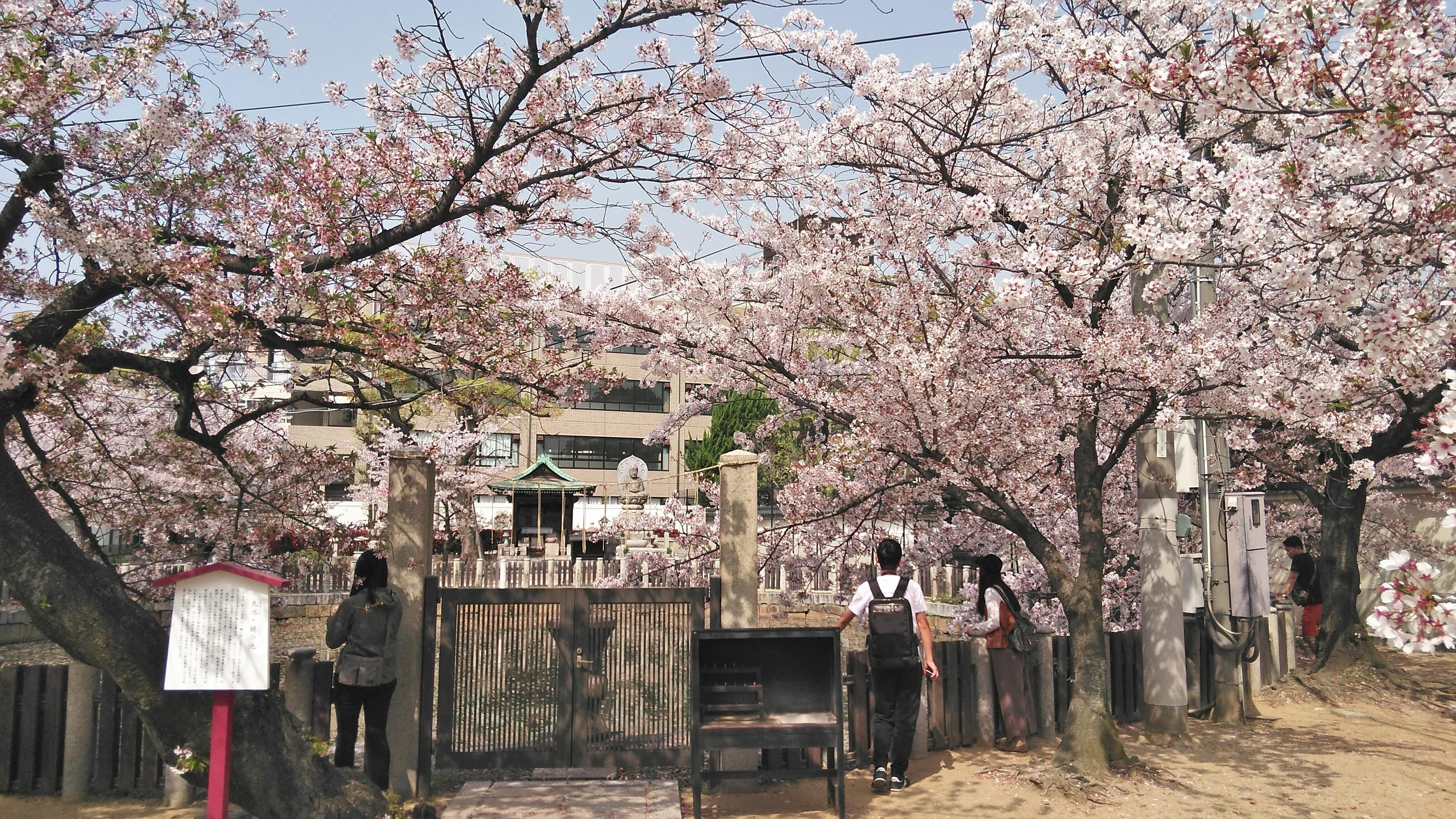 四天王寺の庭園