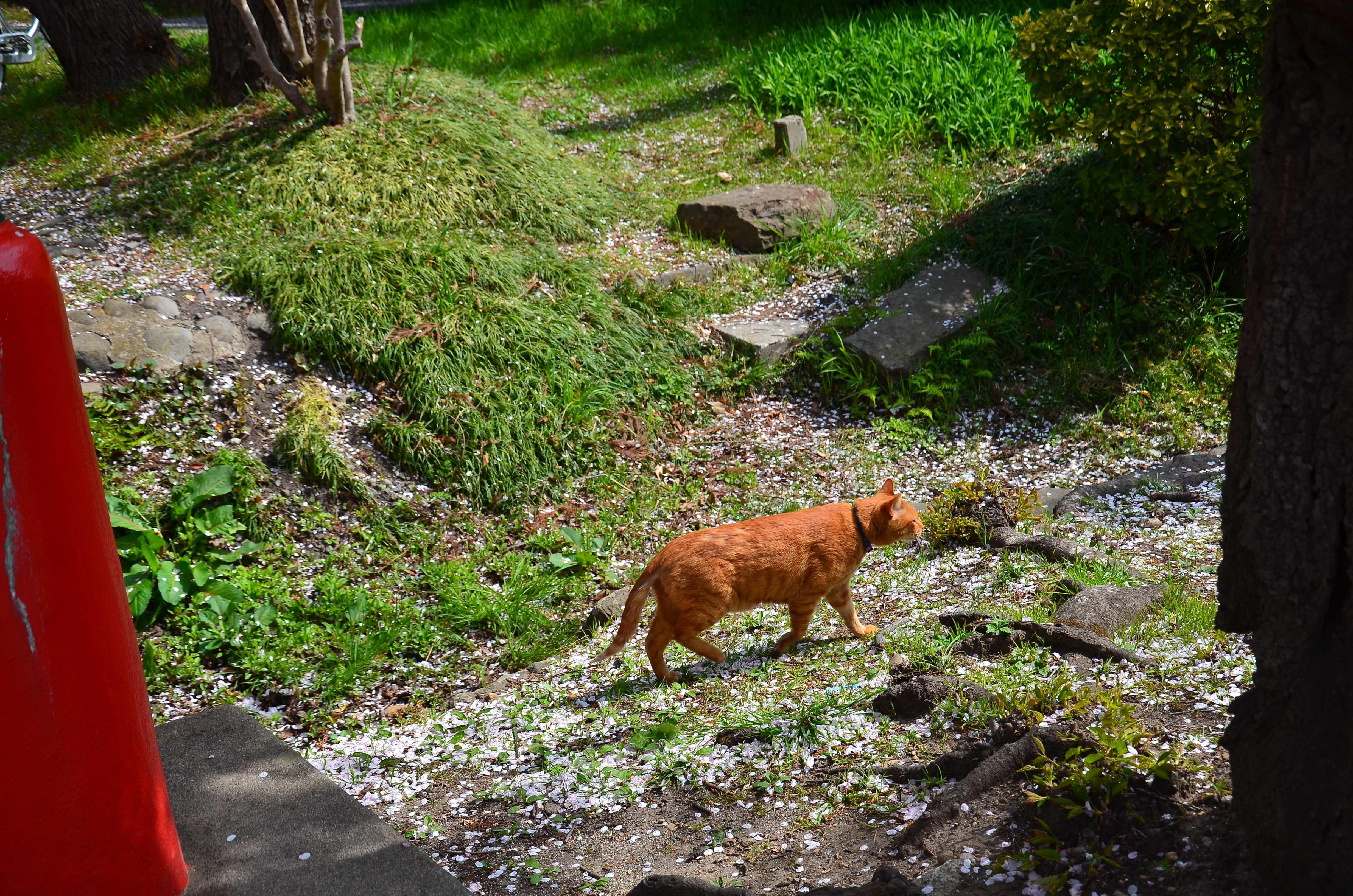 仙台東照宮の動物