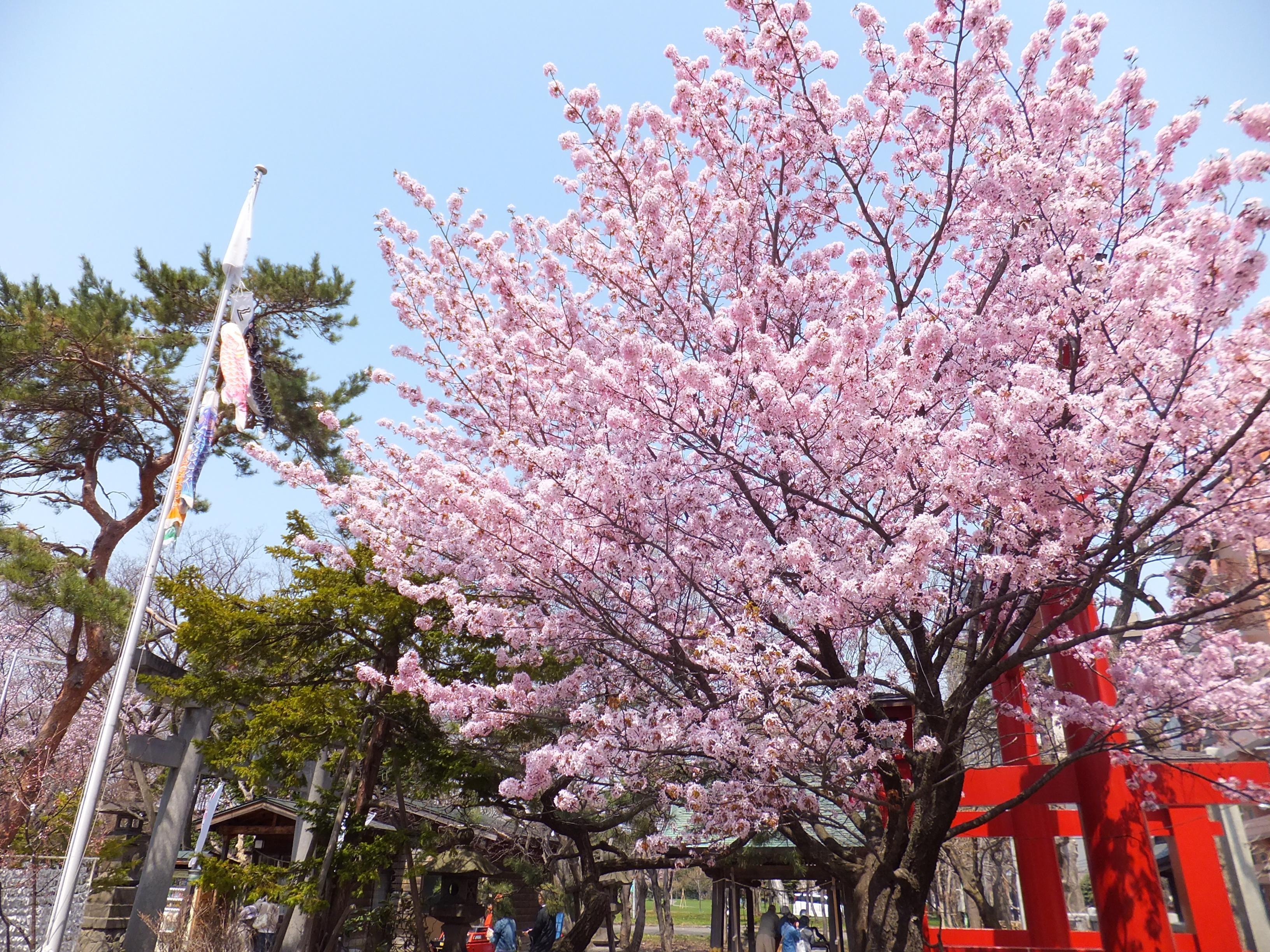 弥彦神社(伊夜日子神社)の自然