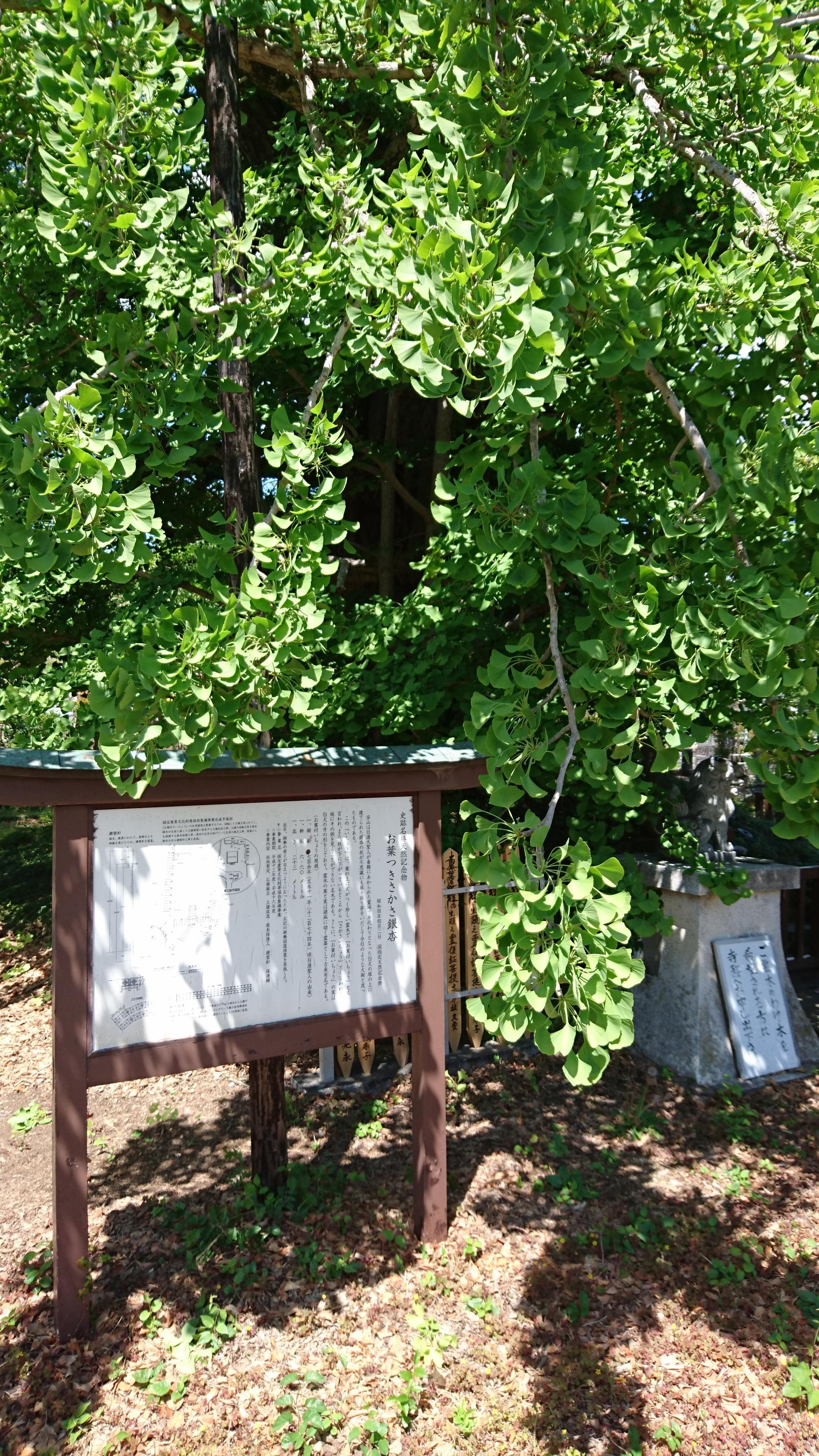 上澤寺の建物その他