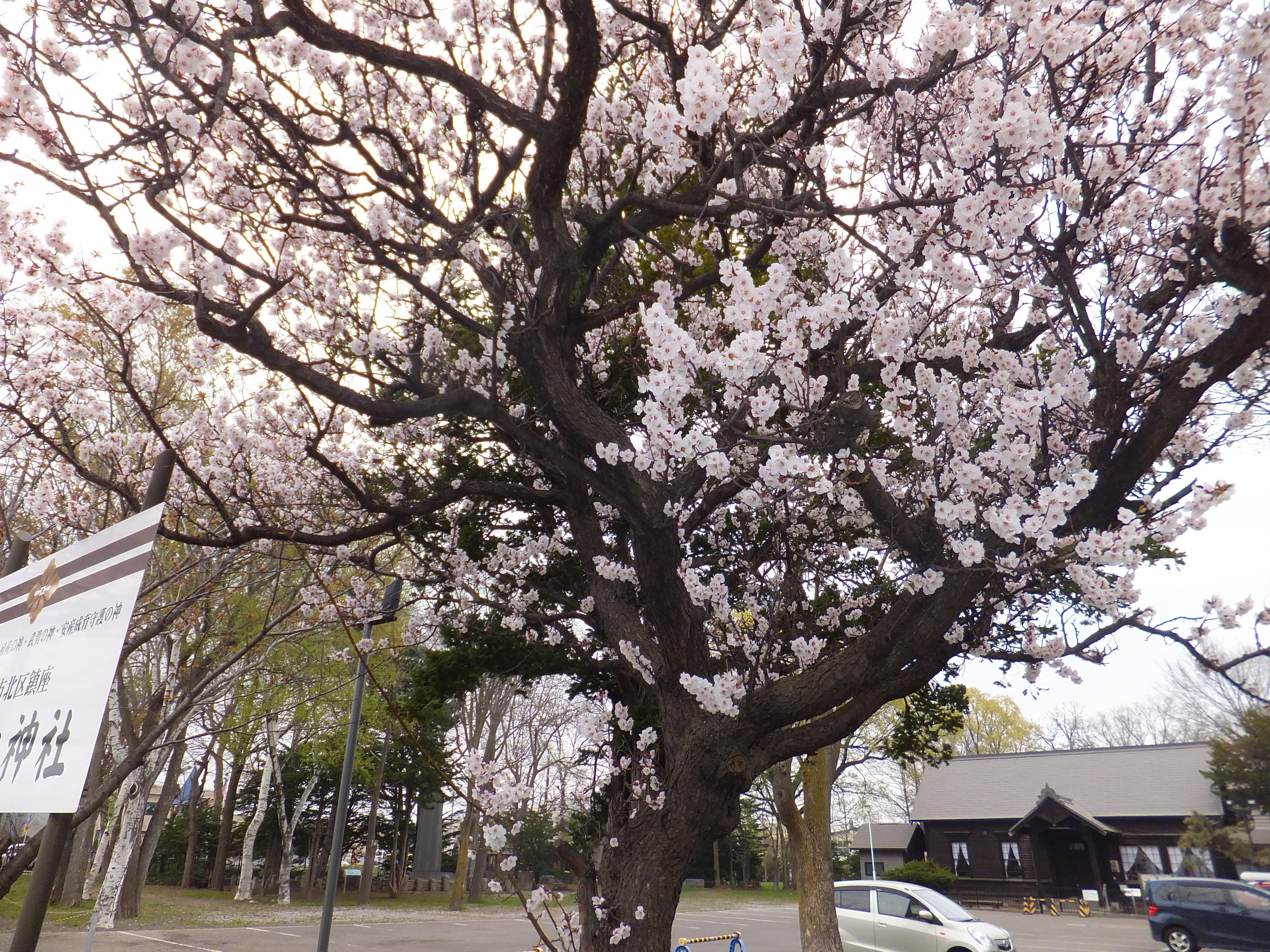 新琴似神社の庭園