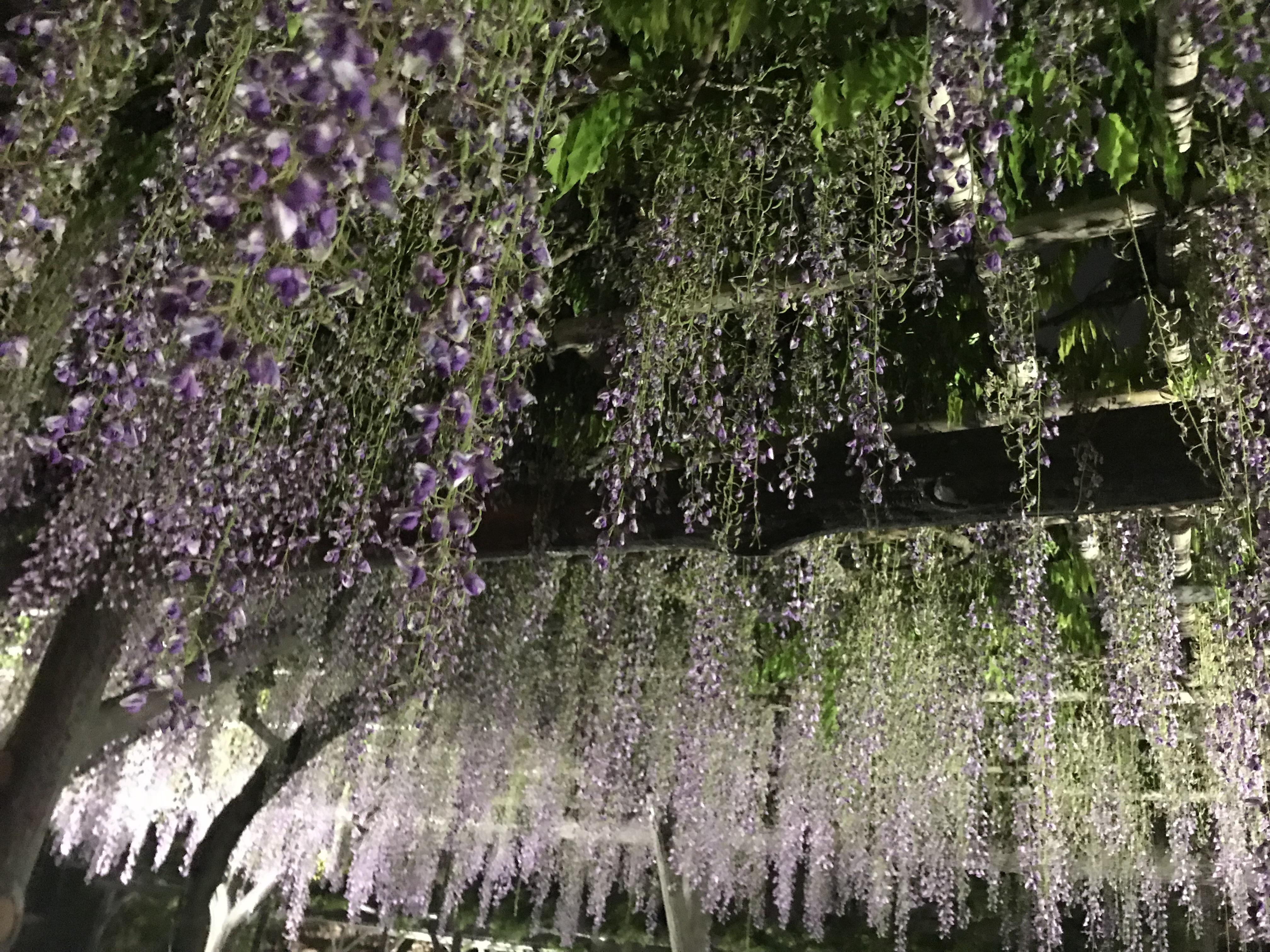 亀戸天神社の庭園