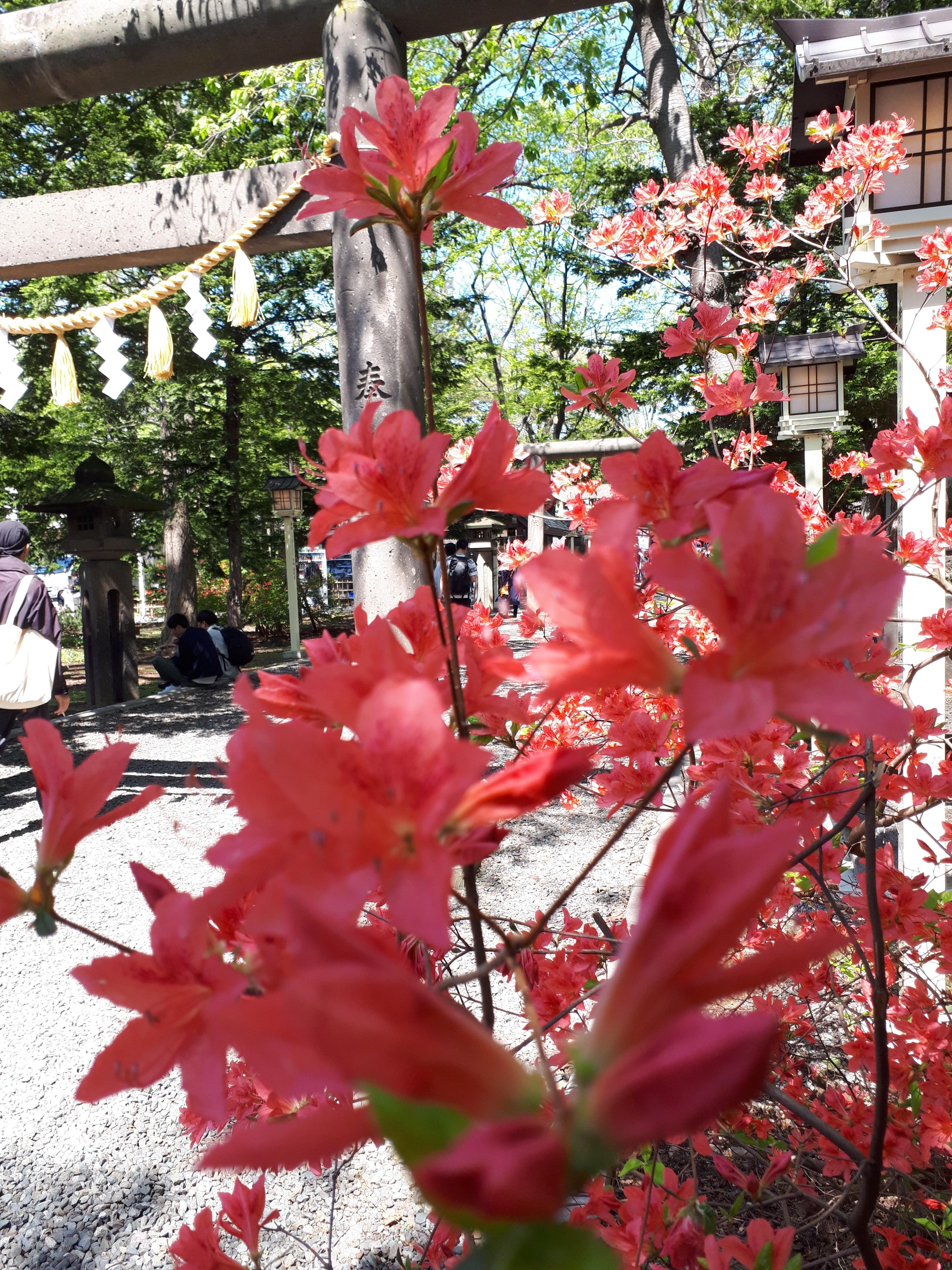 新琴似神社の自然