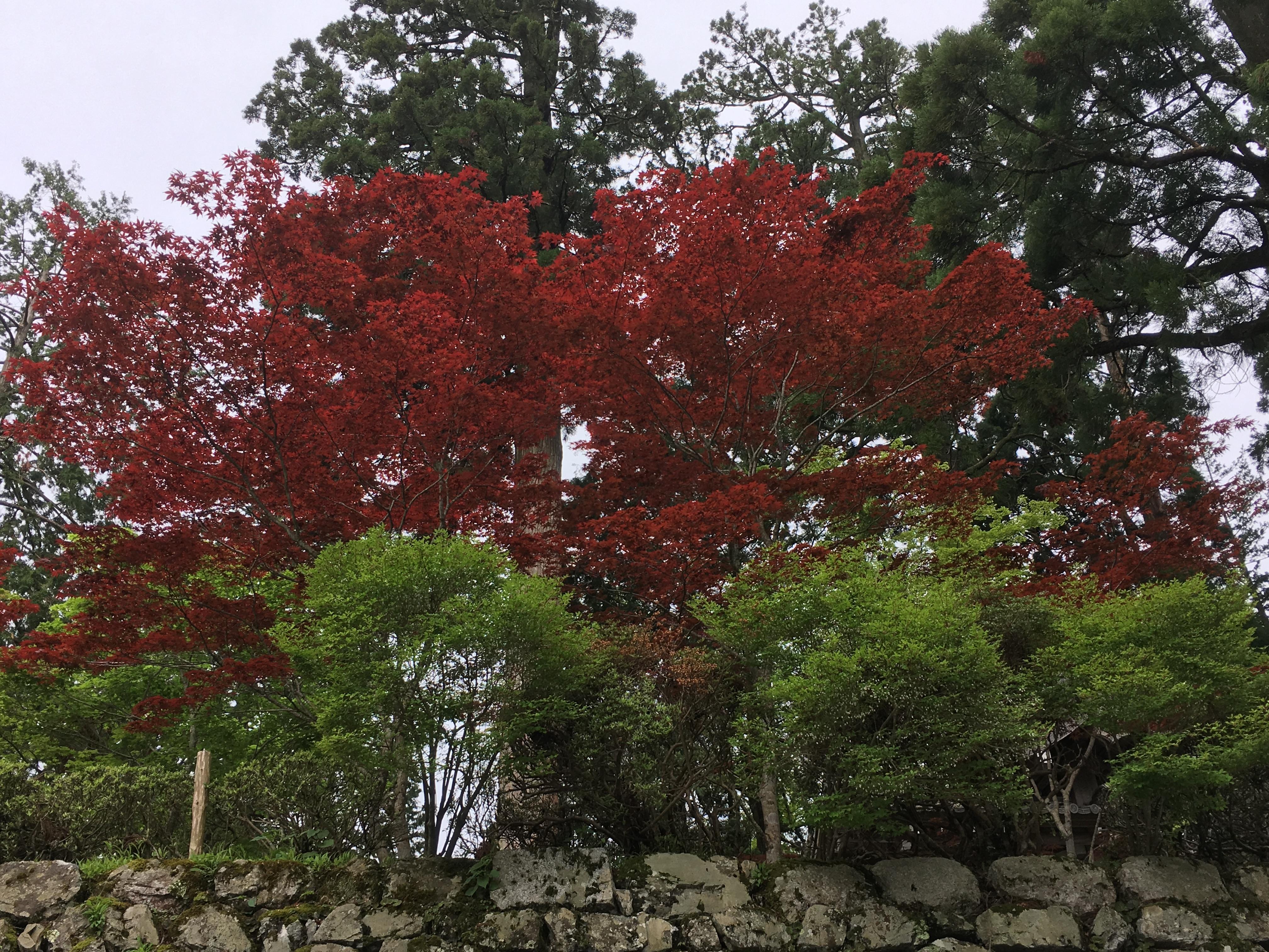 比叡山延暦寺の庭園