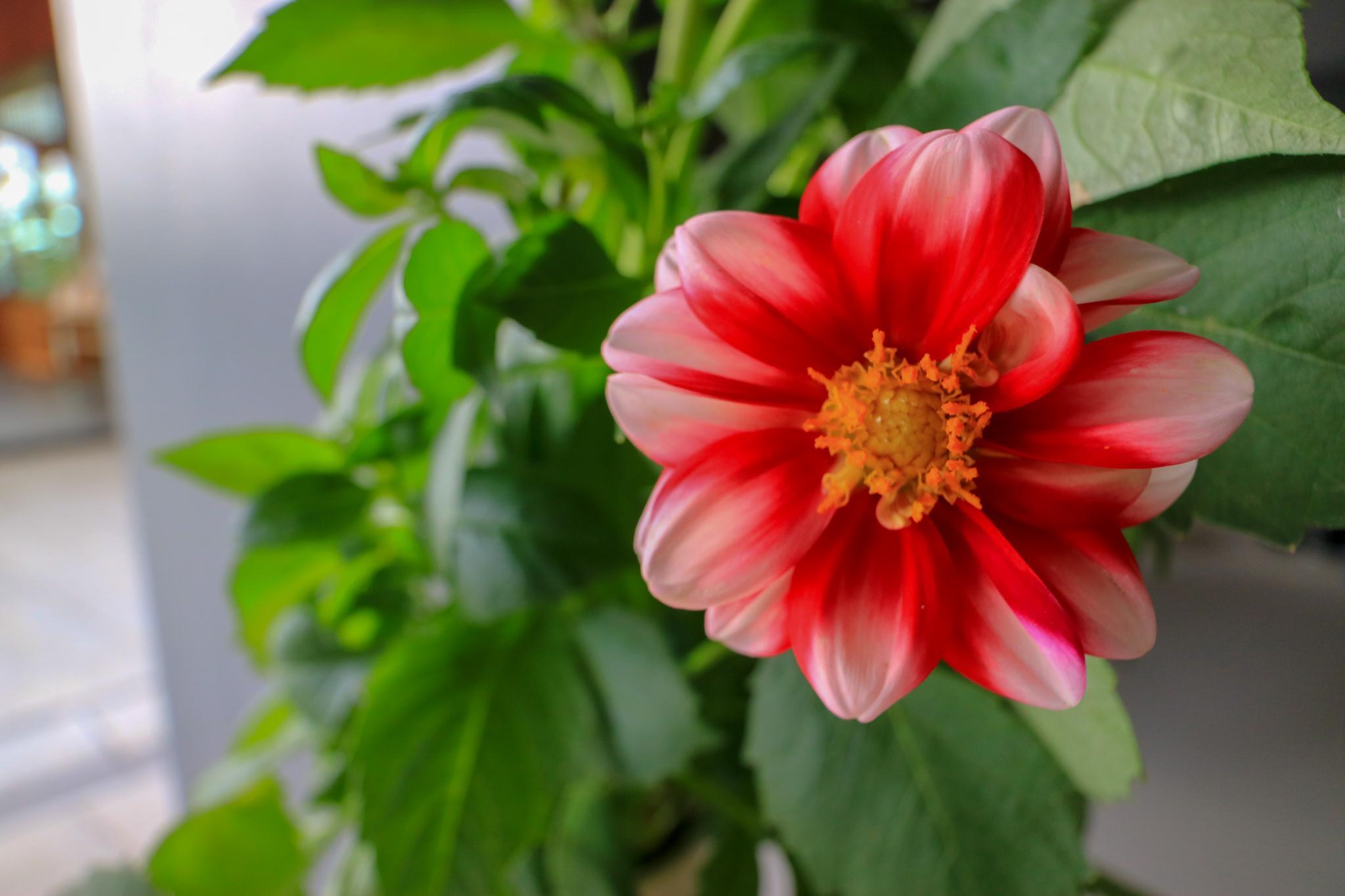 赤城神社の庭園