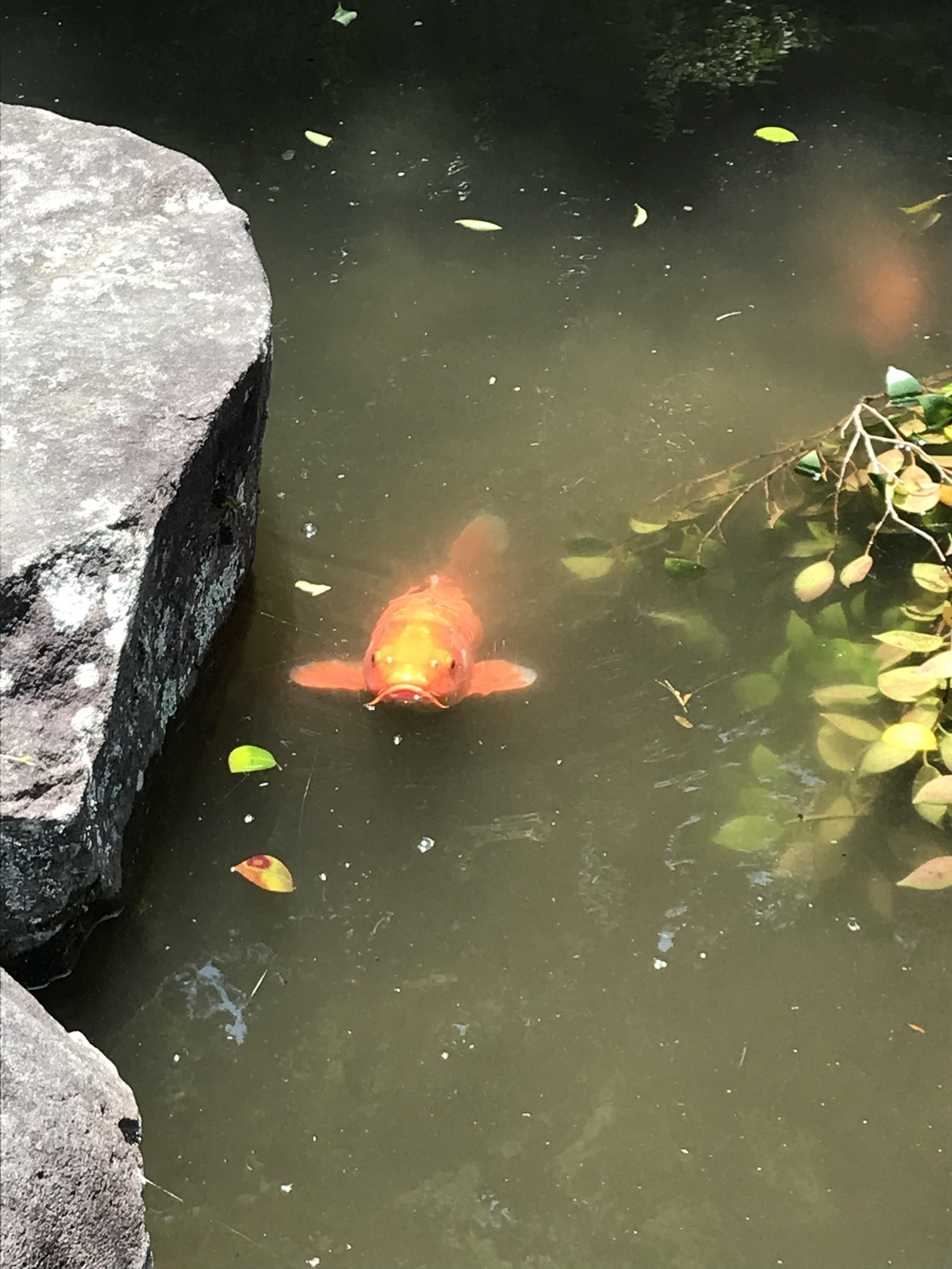 達磨寺の動物