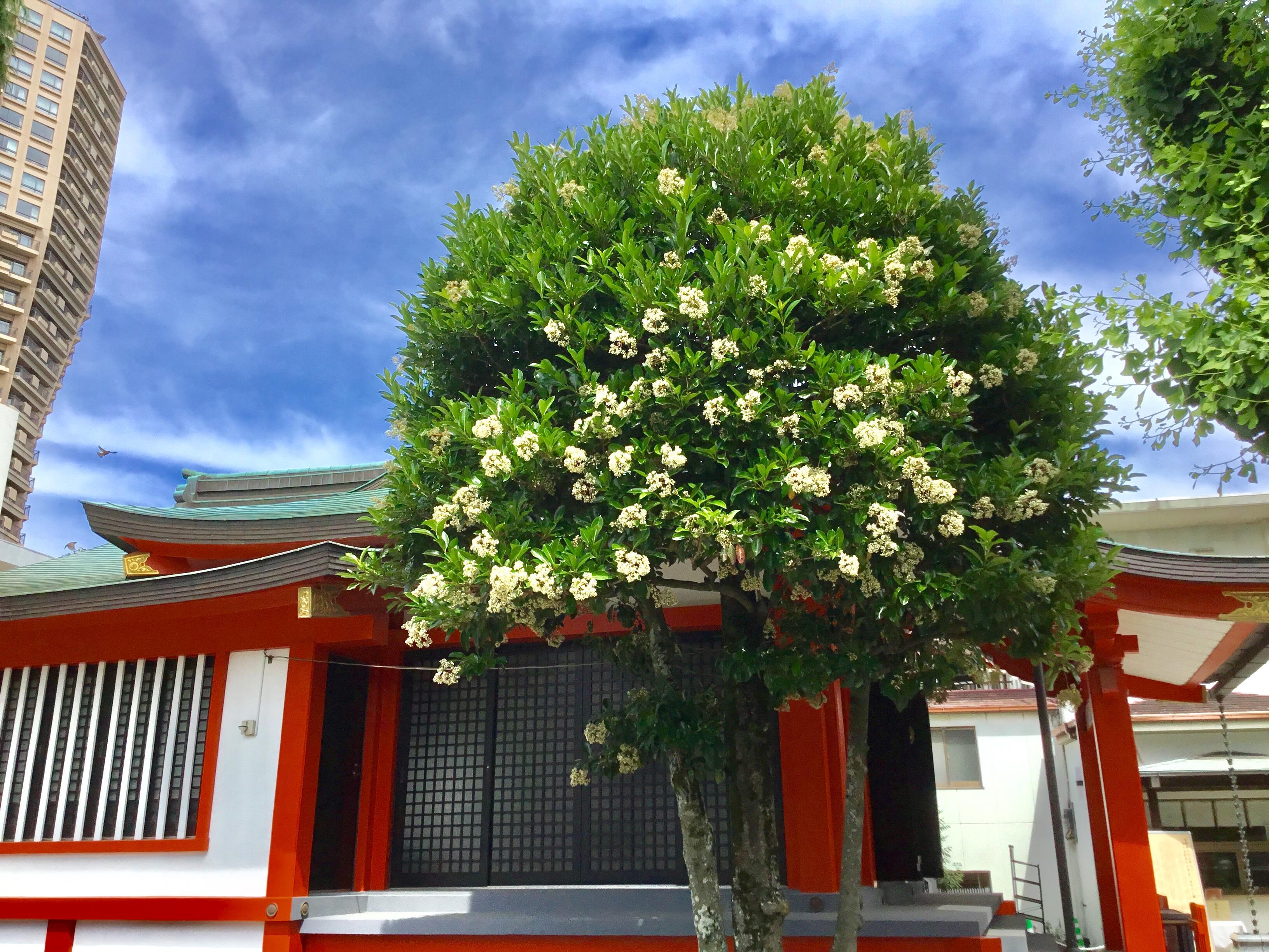 麻布氷川神社の建物その他