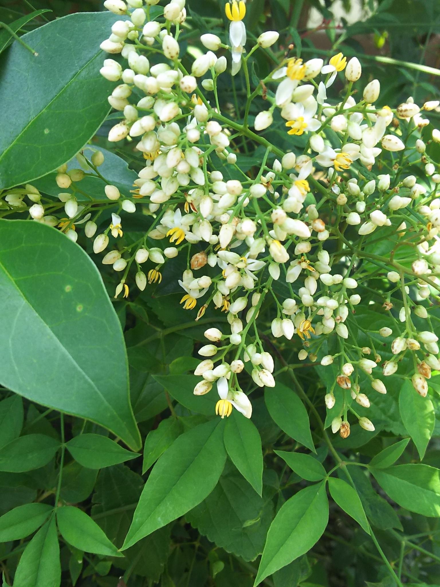六月八幡神社の自然
