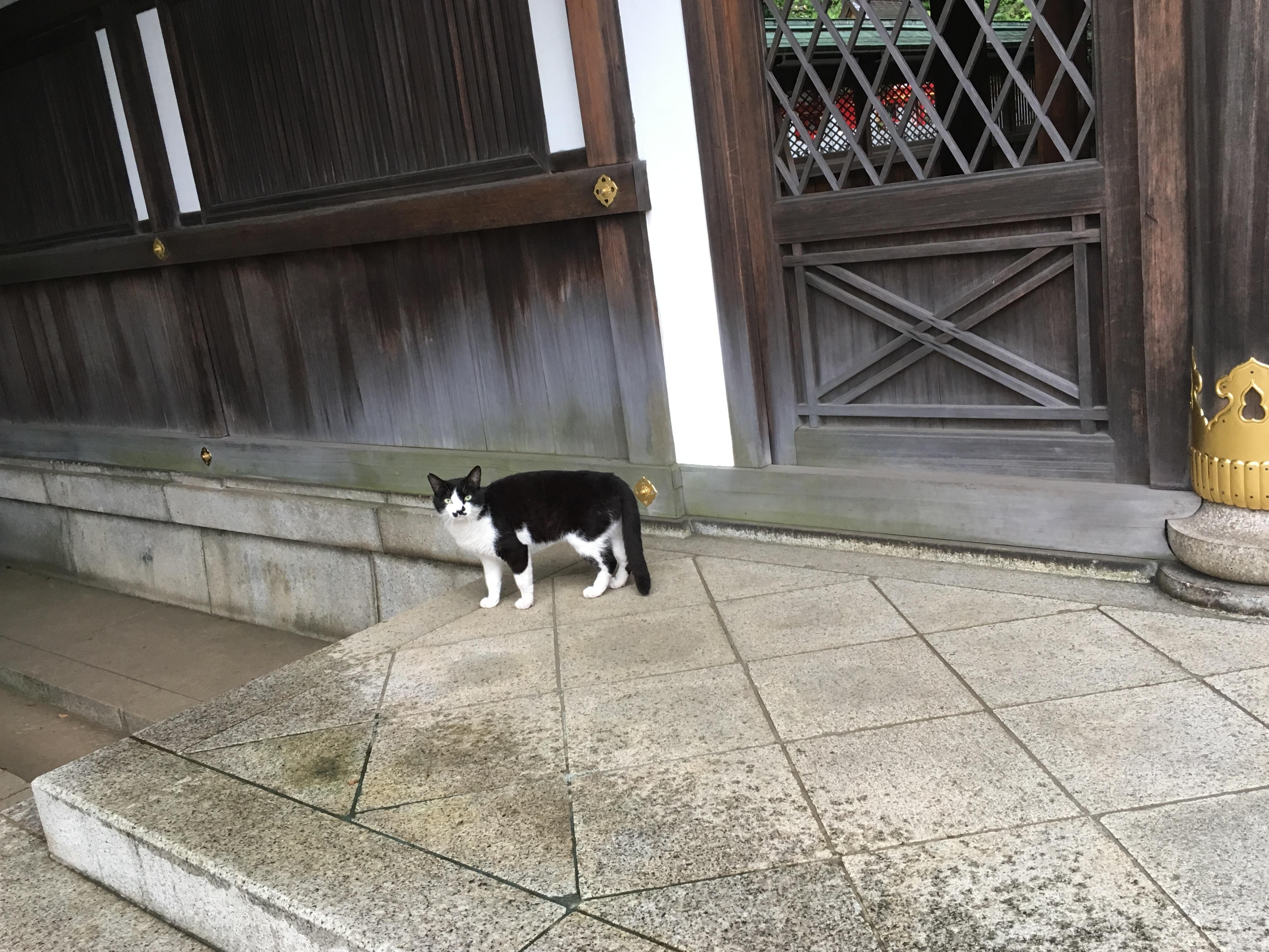 白金氷川神社の動物