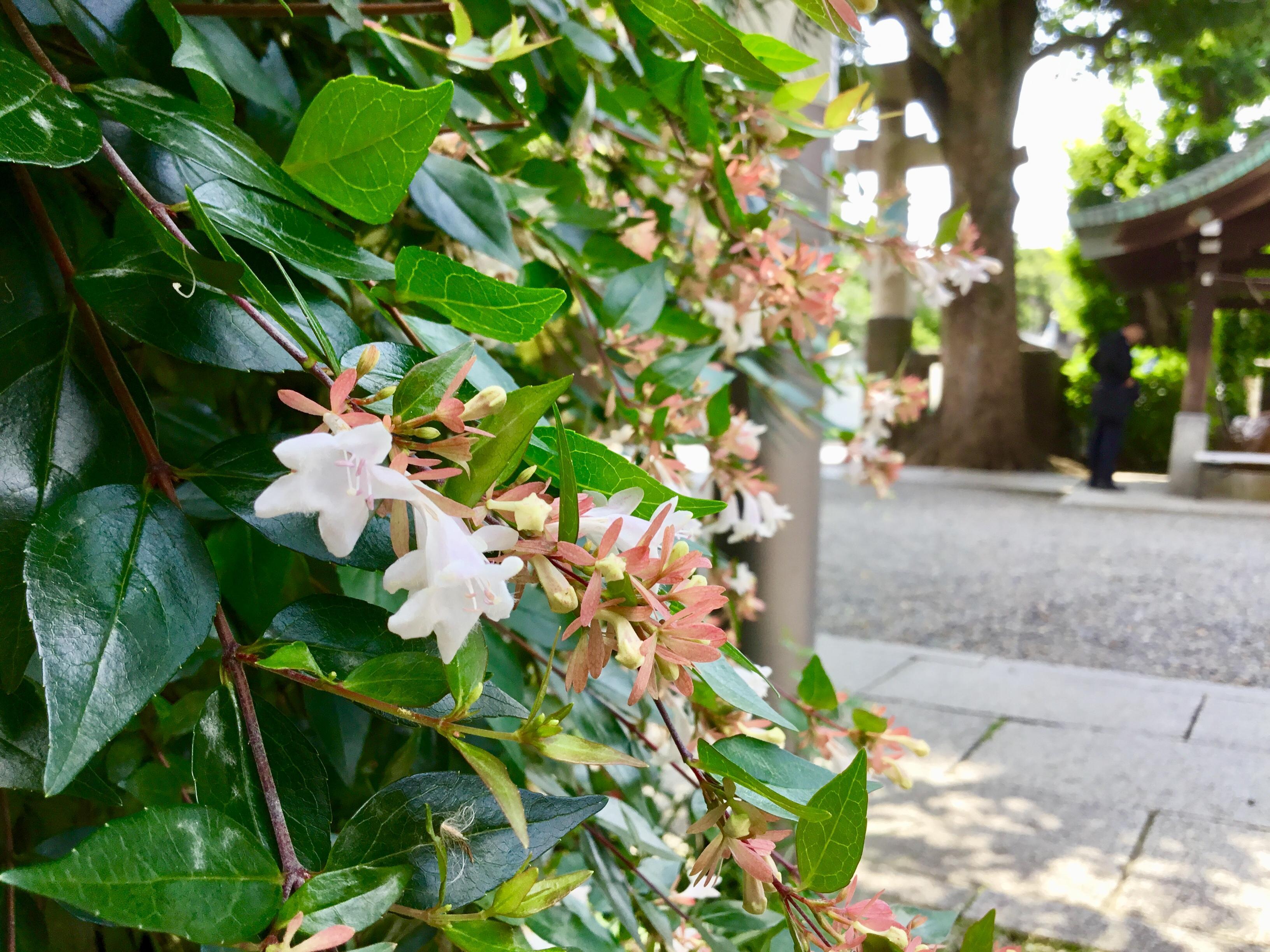 麻布氷川神社の自然