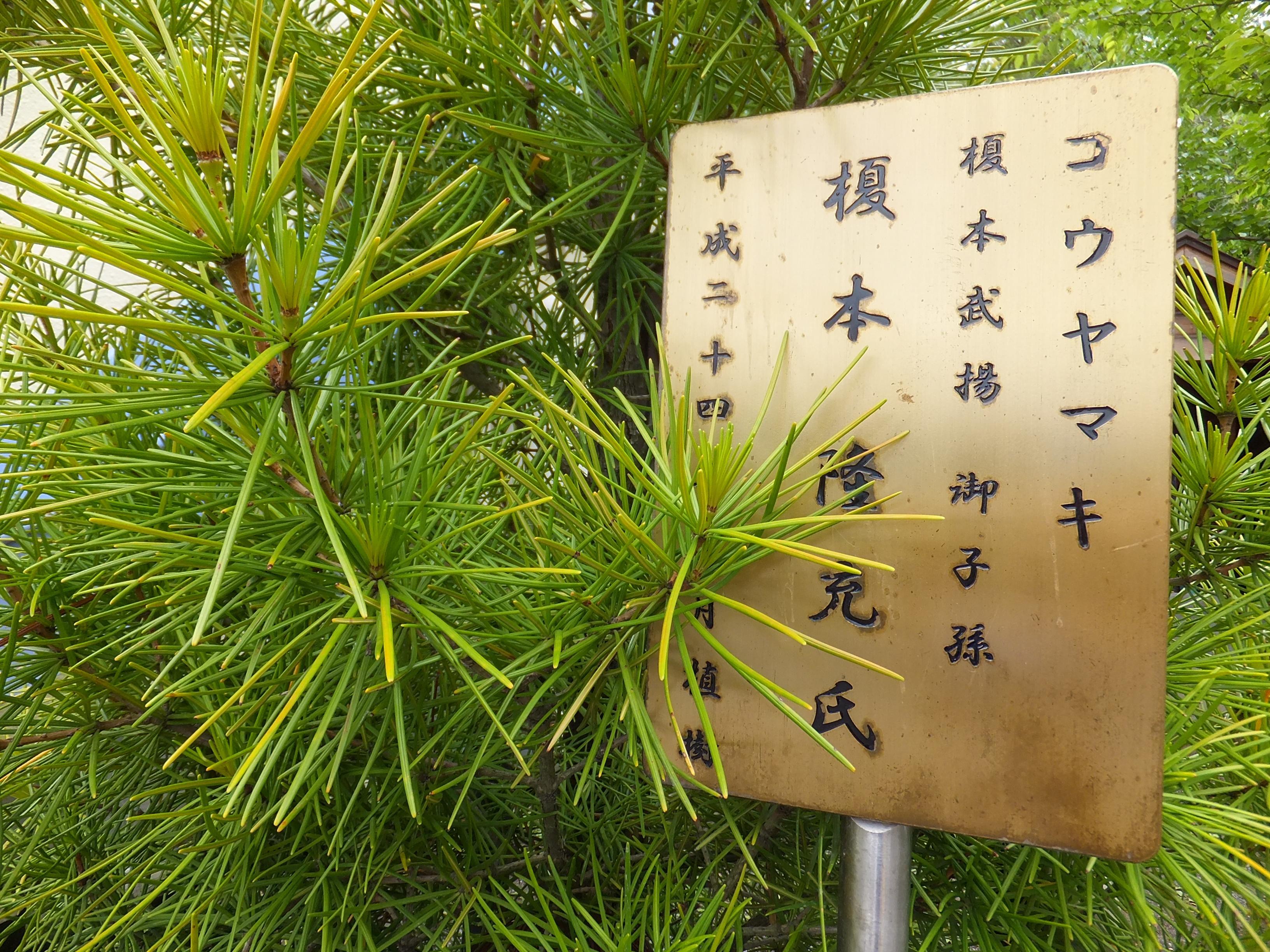 龍宮神社の自然