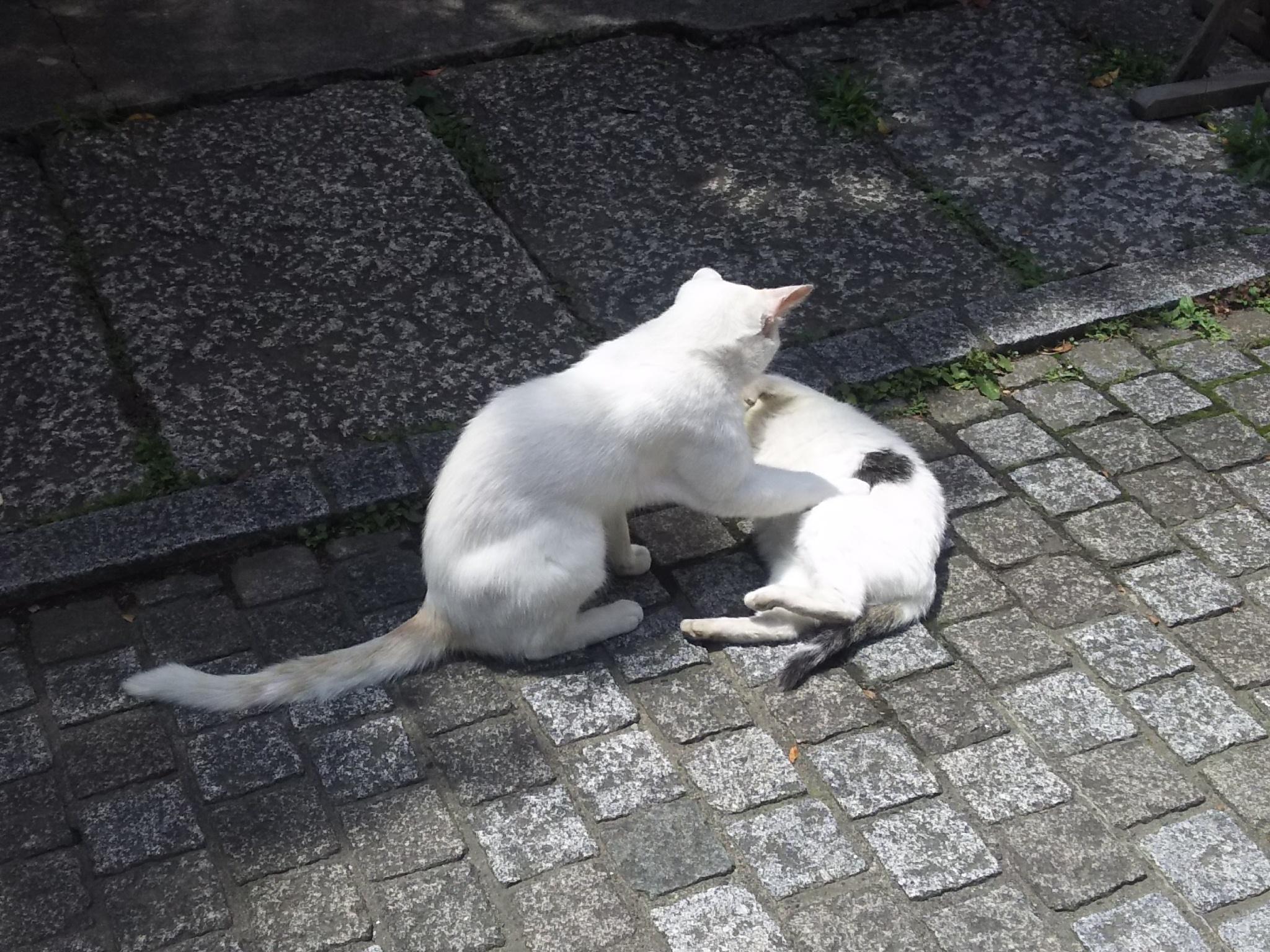 雪塚稲荷神社の動物